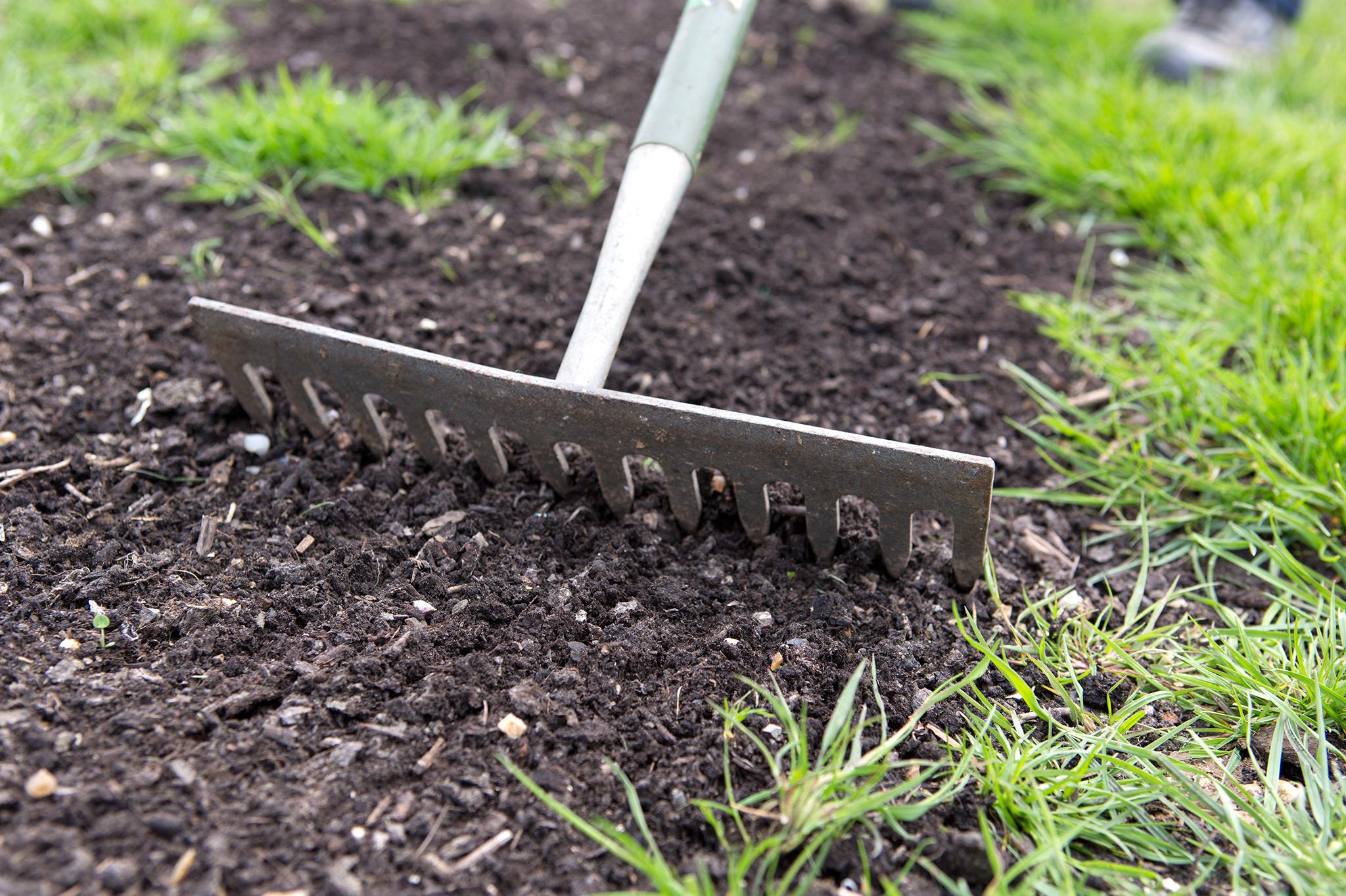 raking-in-grass-seed-2