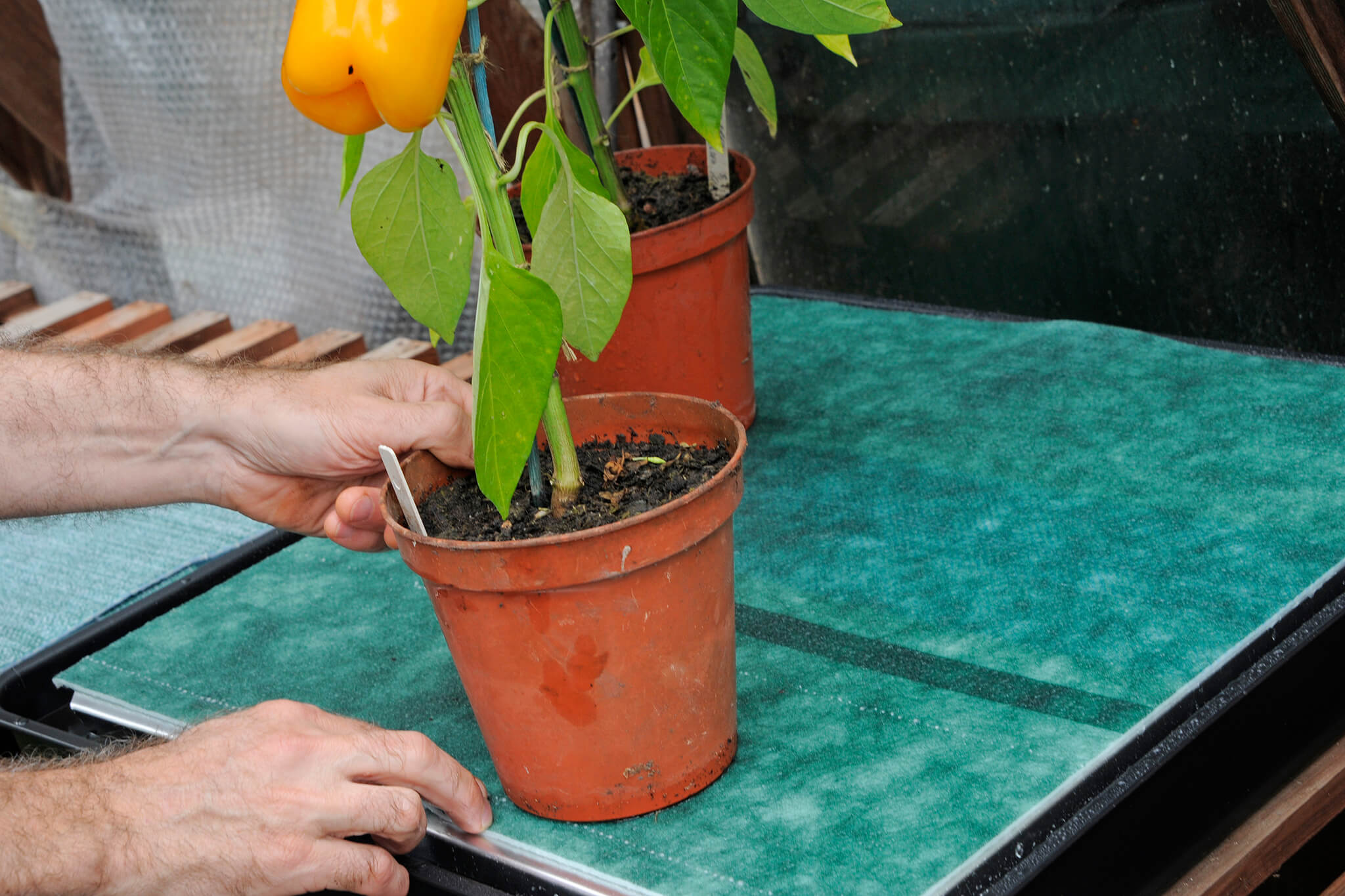 Self-watering capillary mat