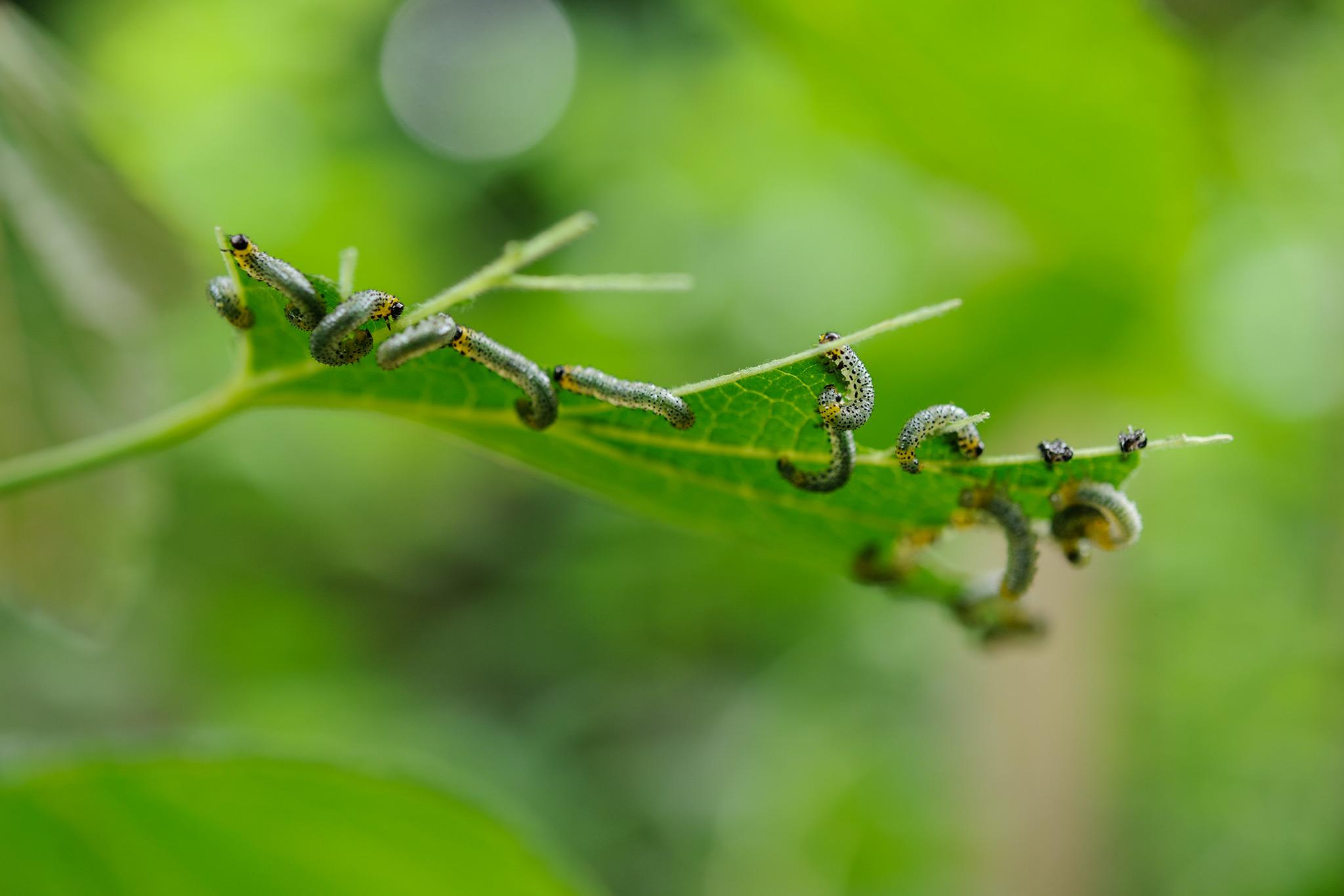 netting-a-gooseberry-bush-3