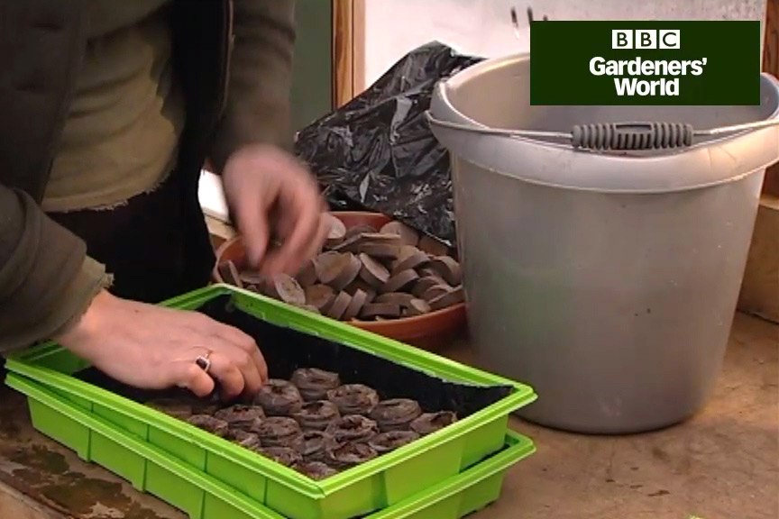 How to sow tomato seeds in coir pellets video