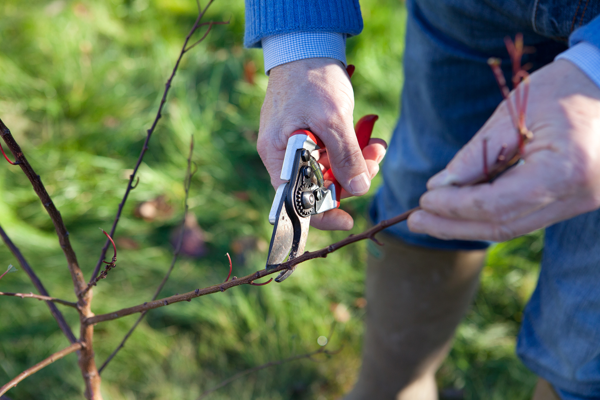 pruning-a-young-tree-2