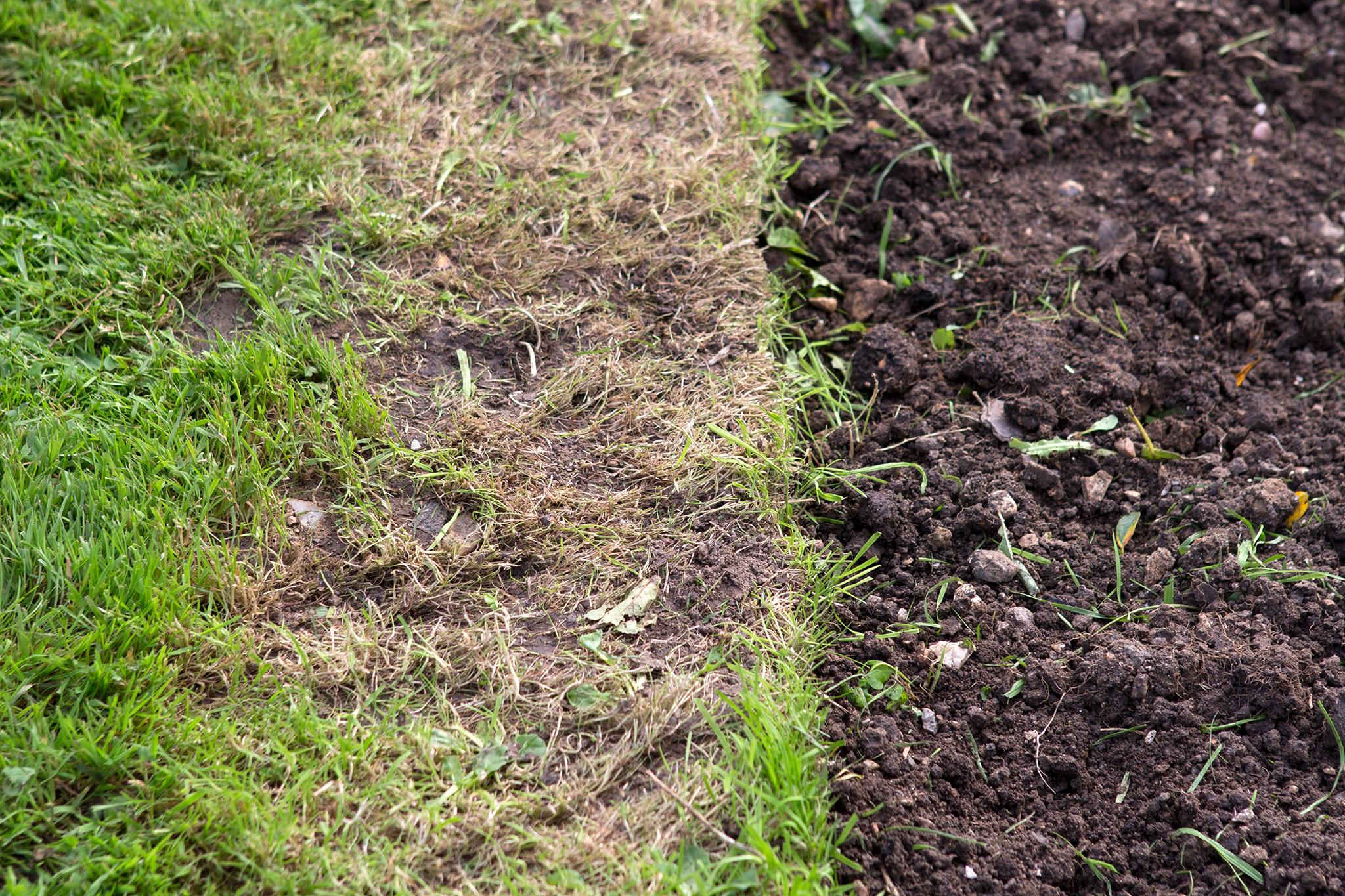 area-of-turf-that-needs-repairing-3