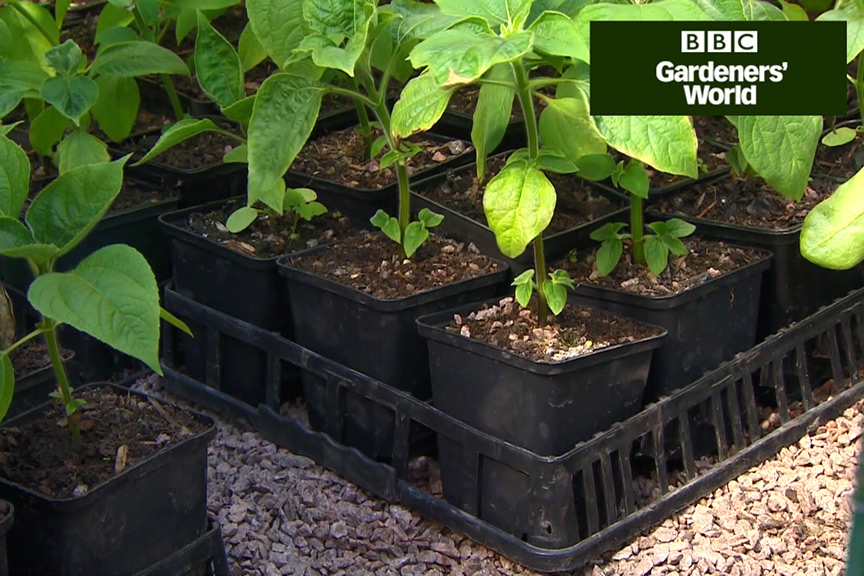 How to deter slugs and snails video