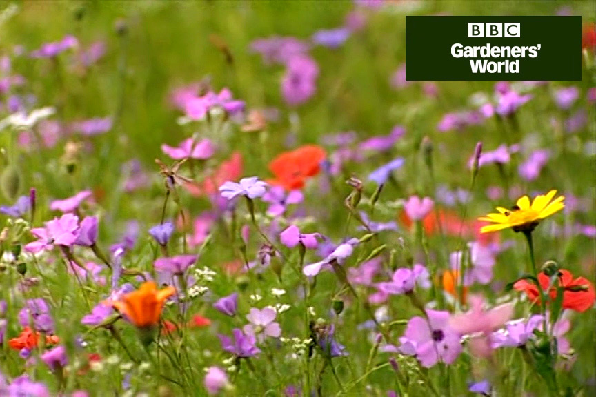Create a bed of hardy annuals - News - Aylings Garden Centre