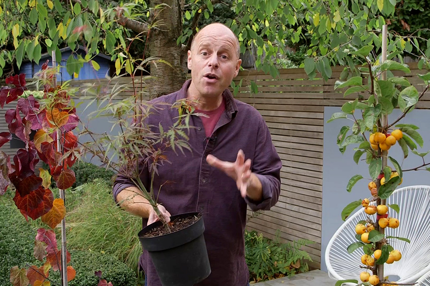 Choosing trees for small gardens video