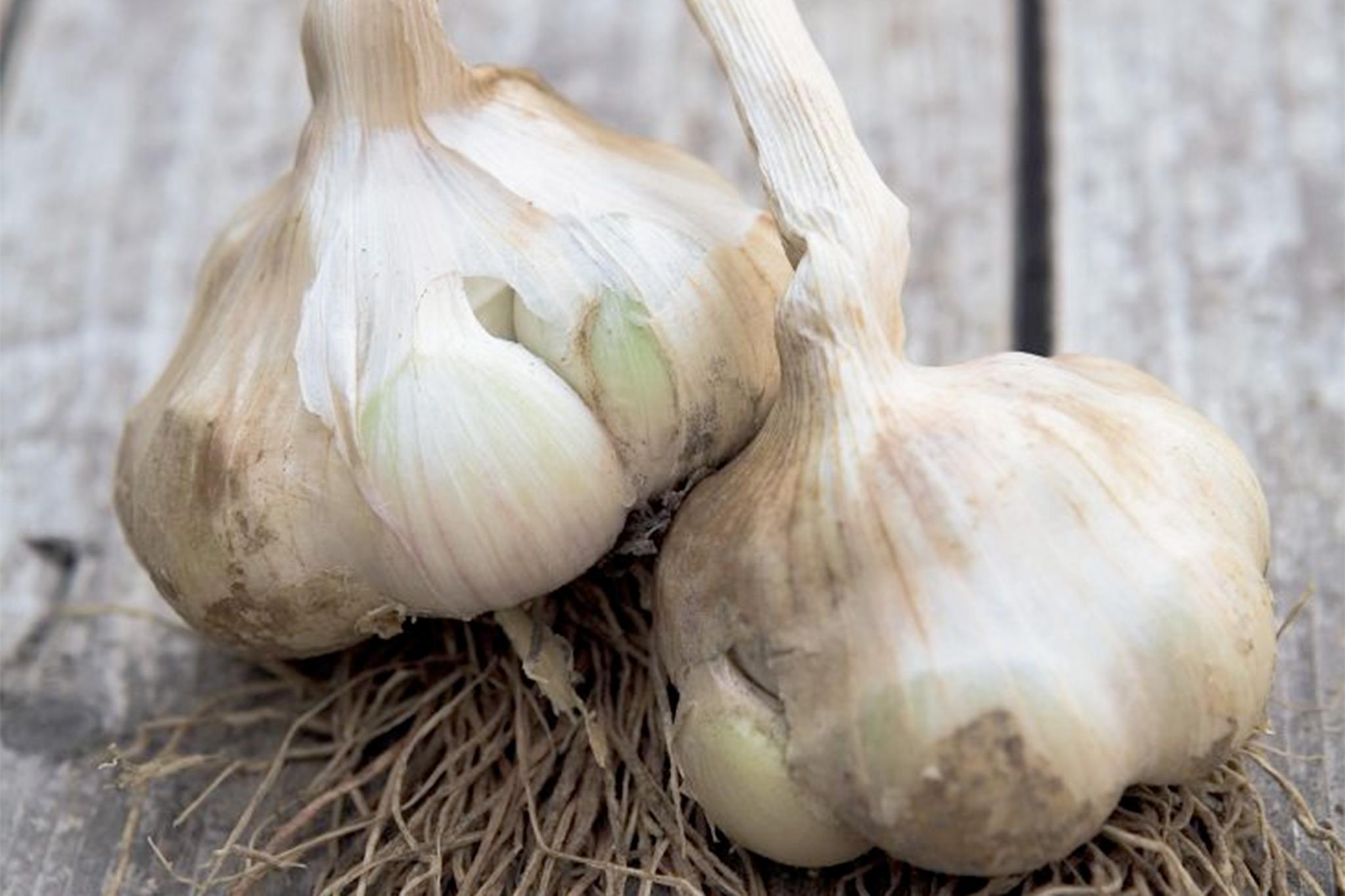 garlic-iberian-wight-2