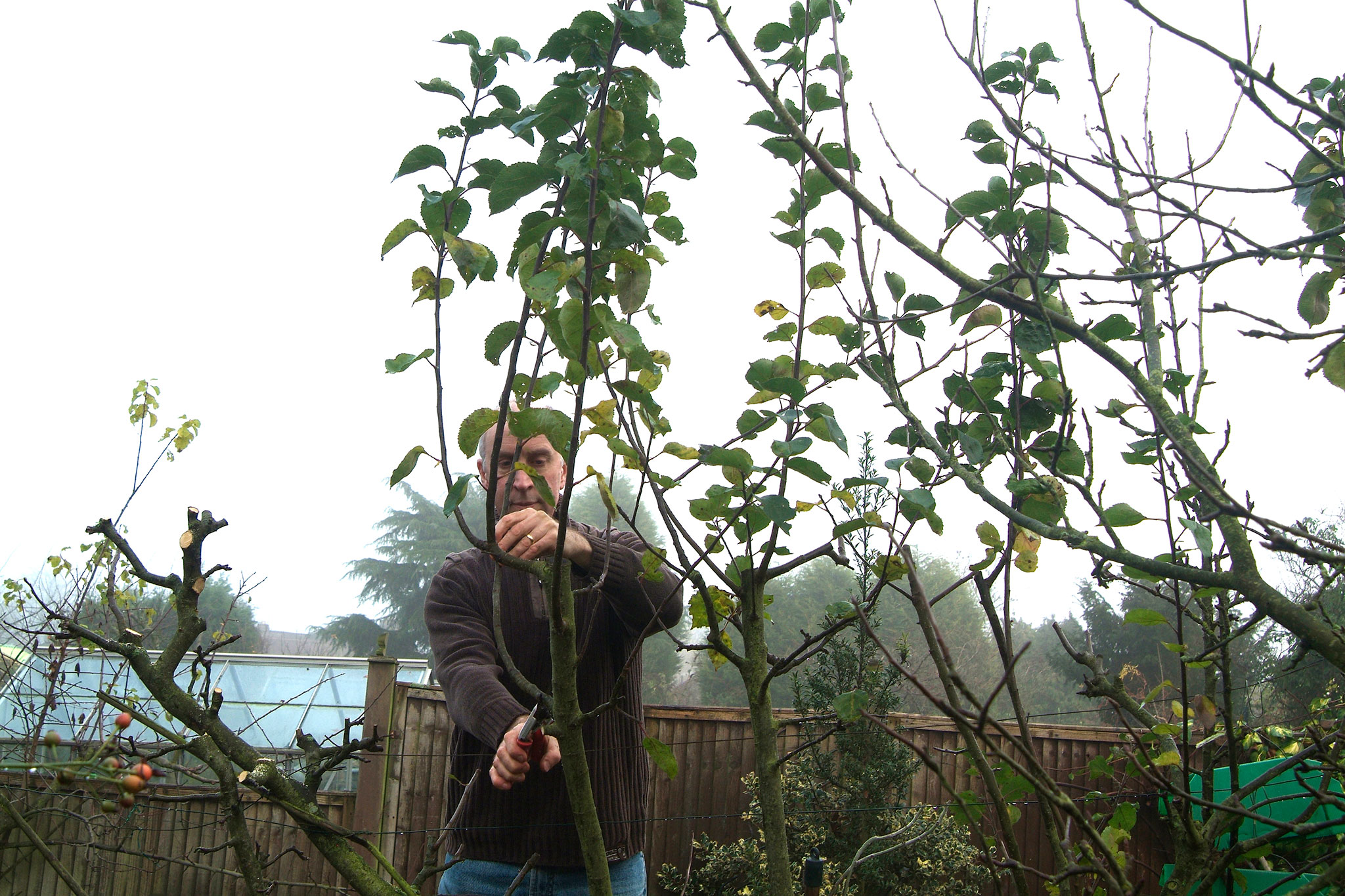 pruning-trees-2