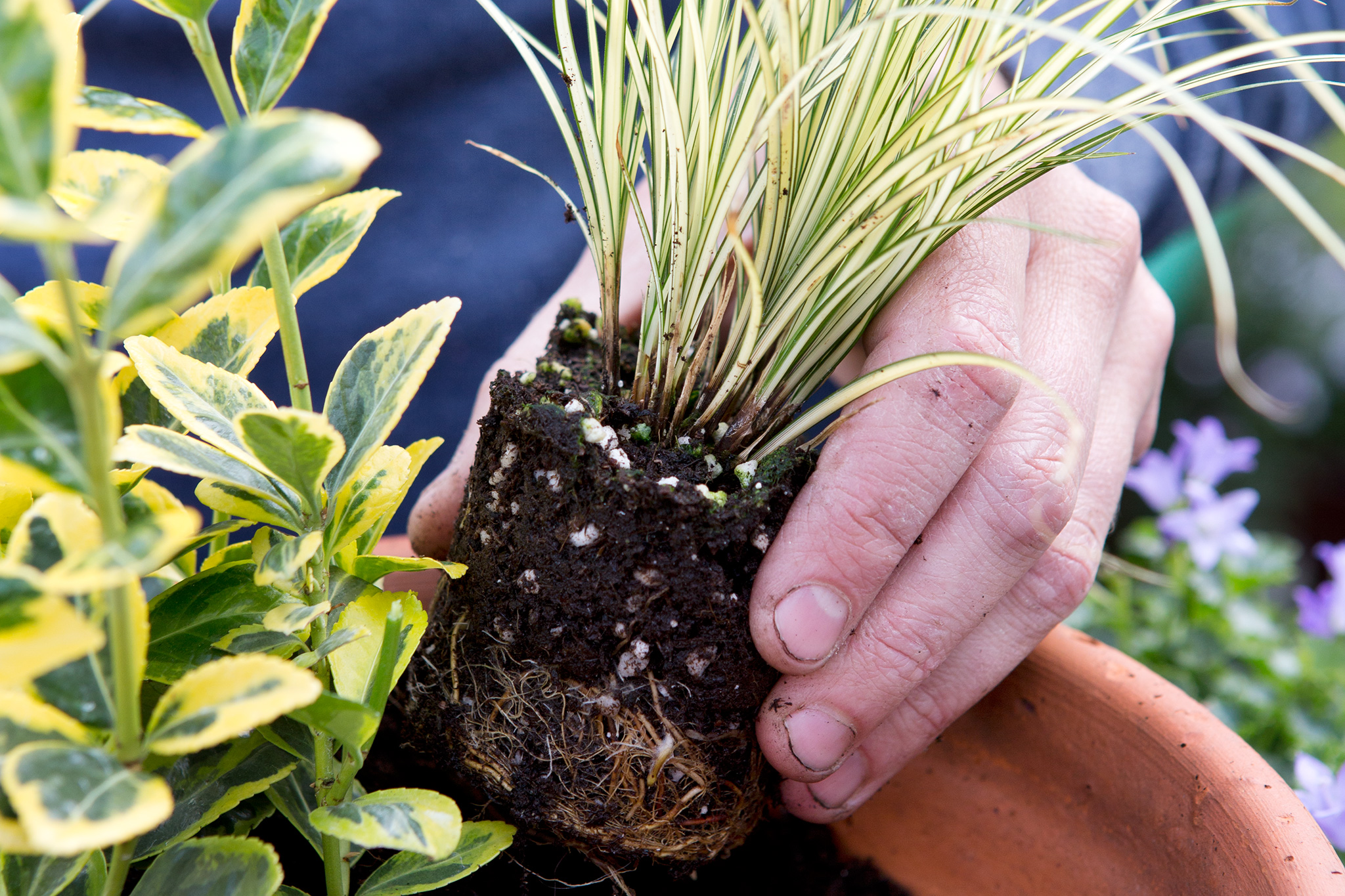 adding-the-remaining-plants-2