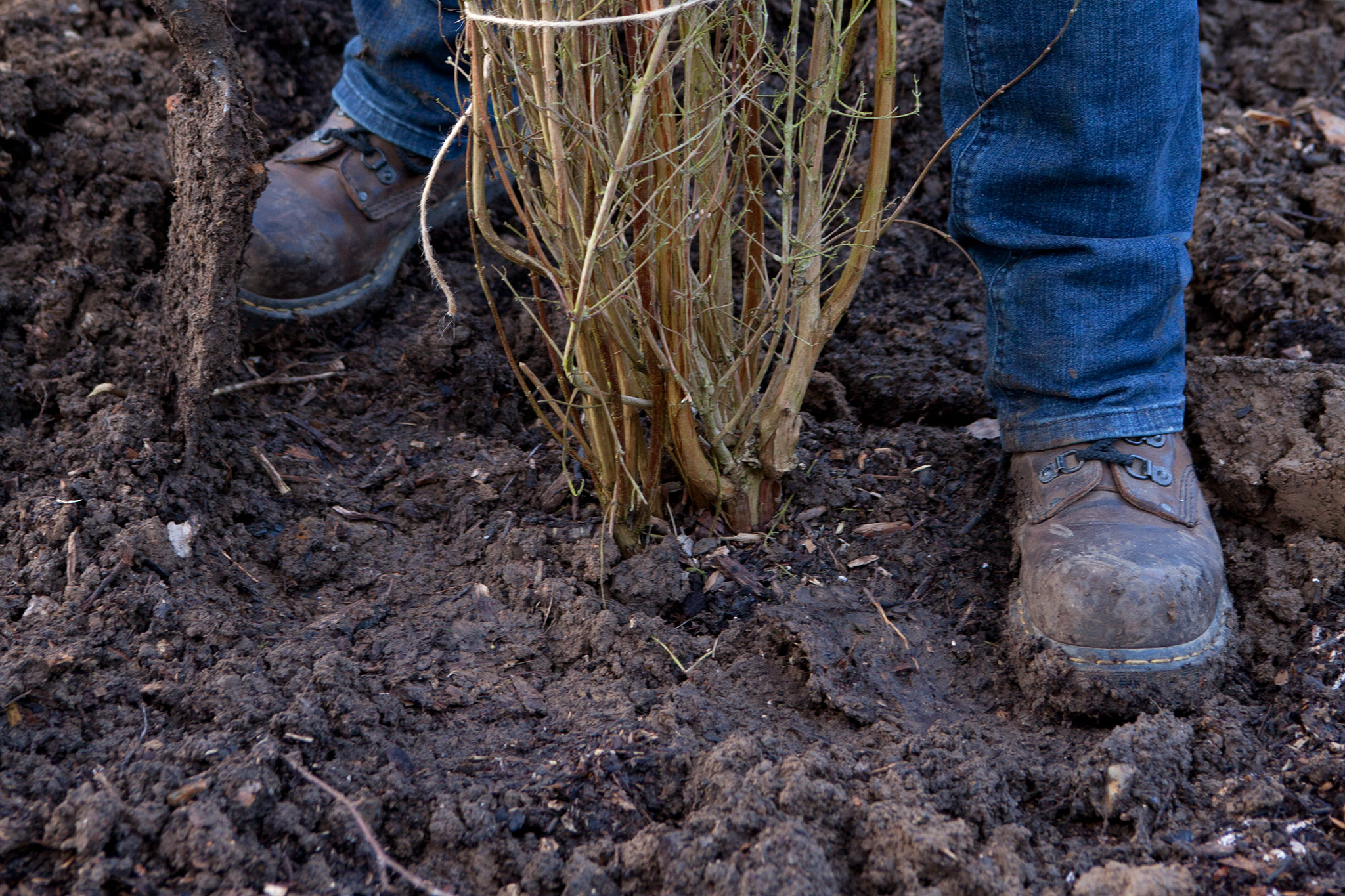 firm-the-soil-2