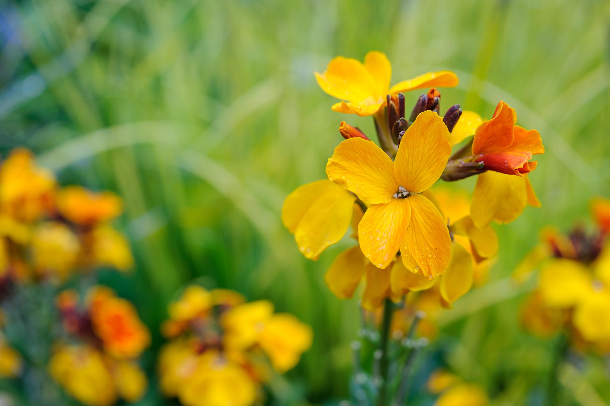wallflowers-9