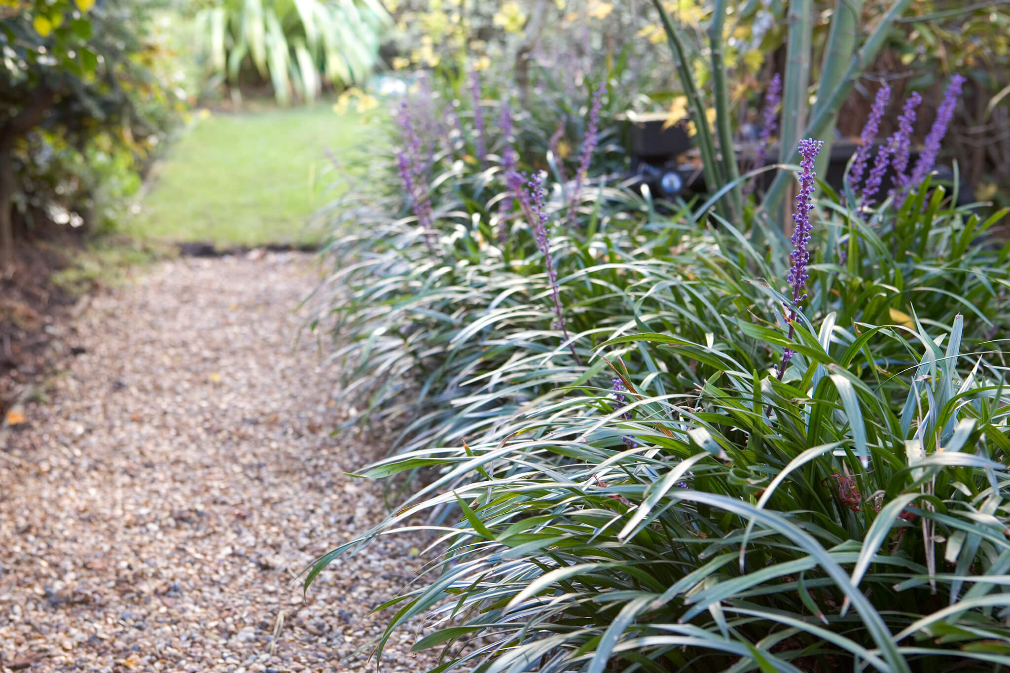 20 plants for dry shade