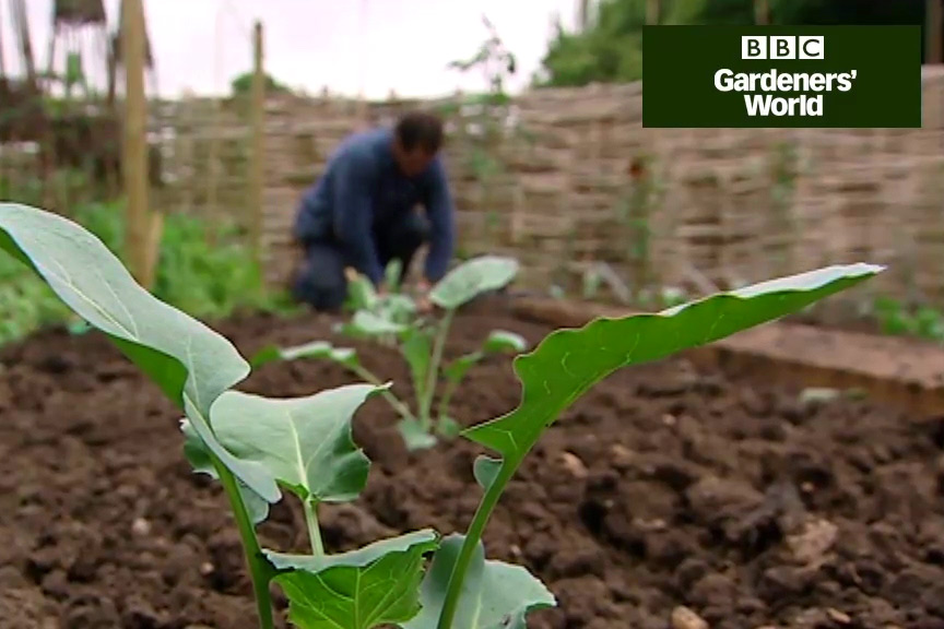 How to plant broccoli video