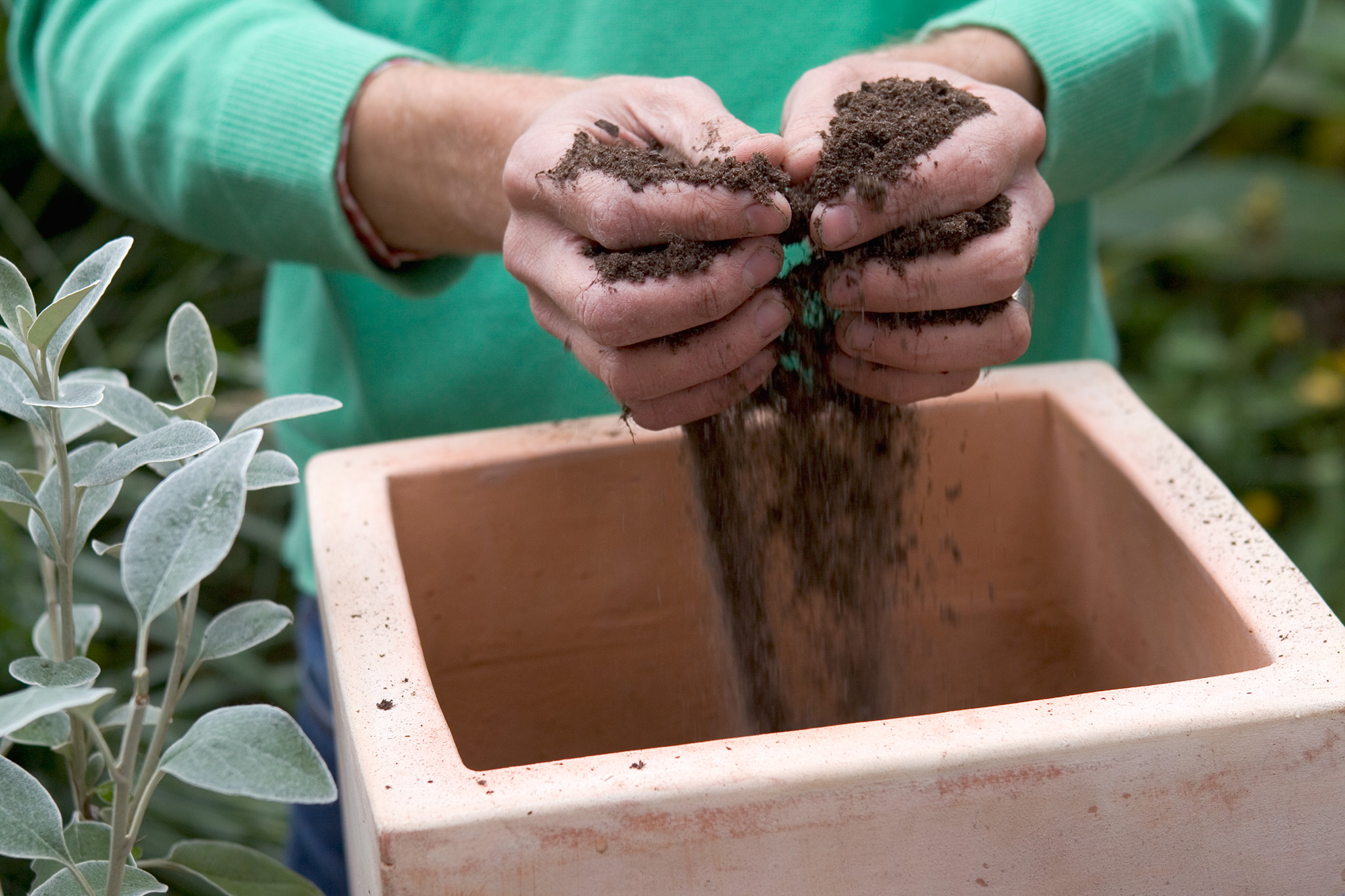 adding-multi-purpose-compost-to-the-pot-2