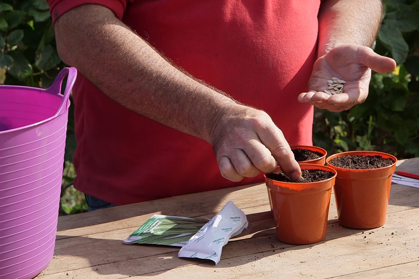 Sowing large seeds video