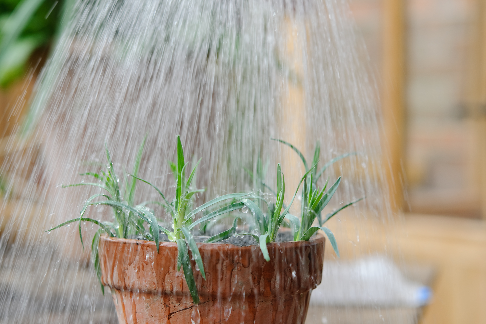 water-in-the-cuttings-well-3