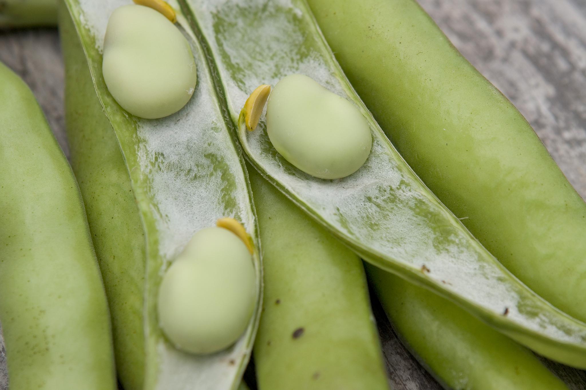 broad-bean-aquadulce-claudia-2