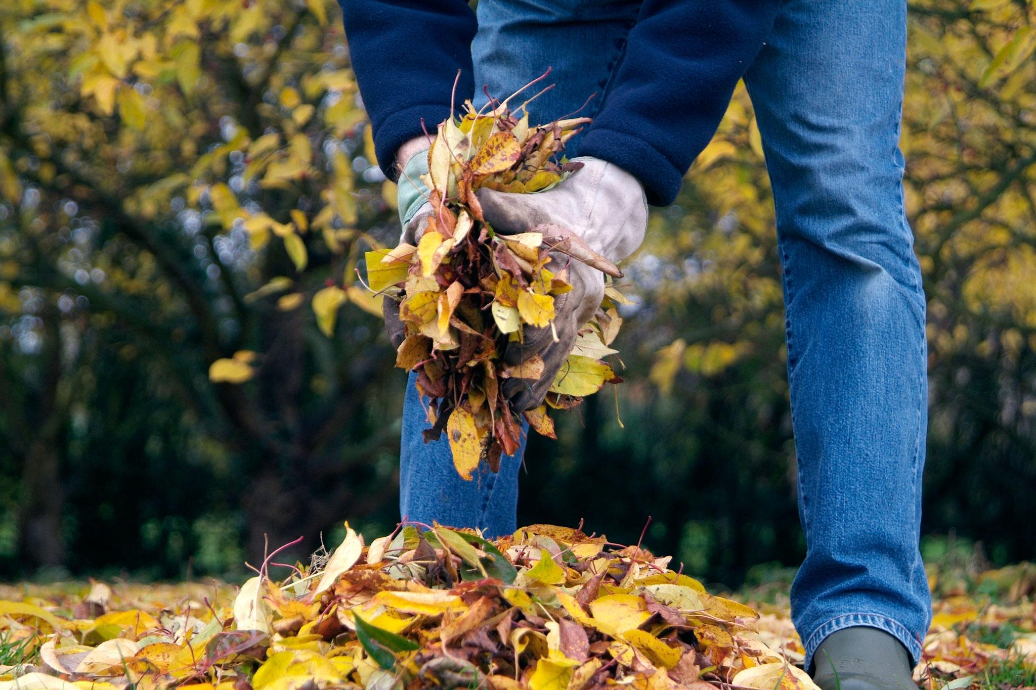 Gathering autumn leaves