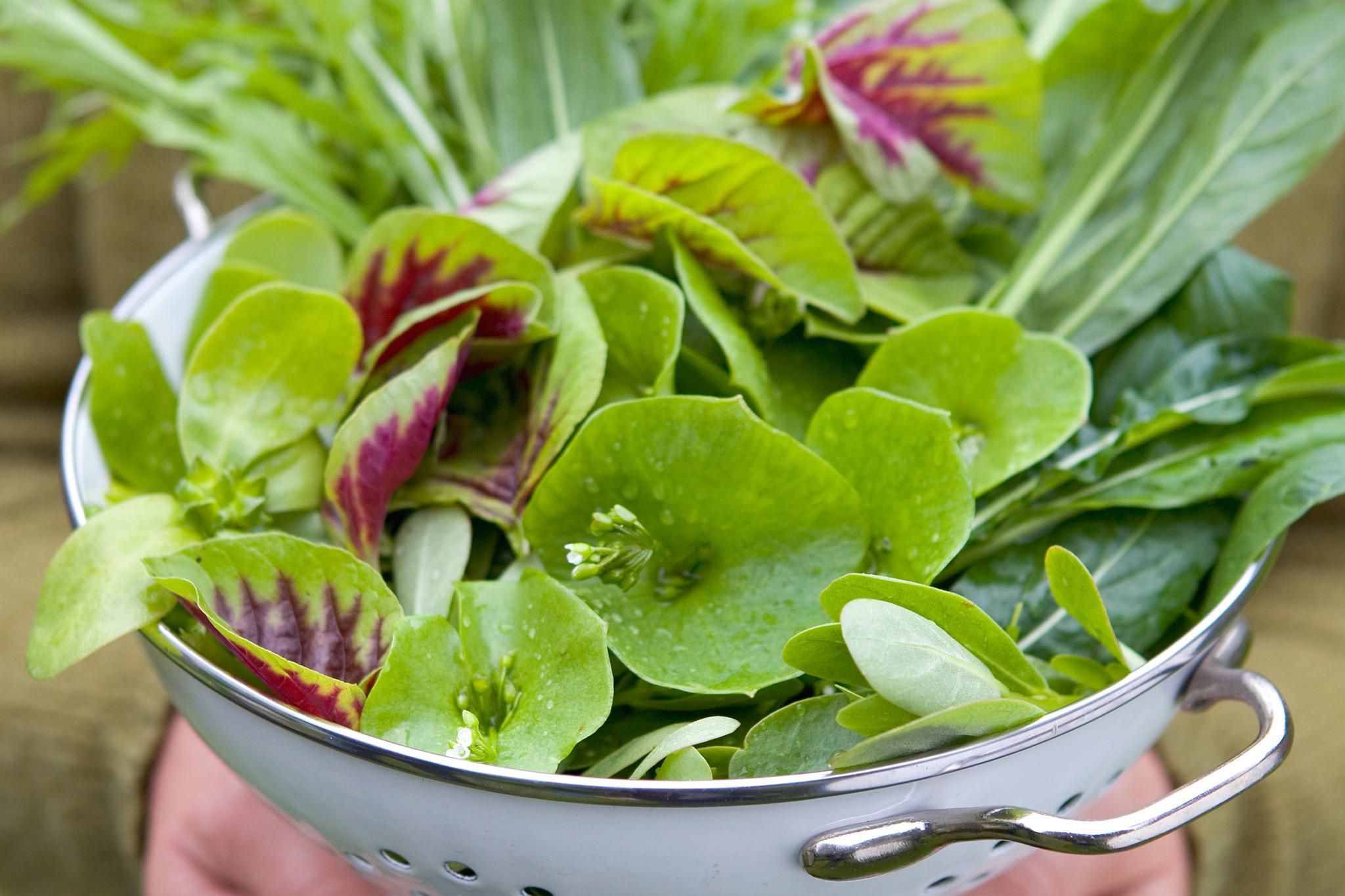 salad-leaves-8