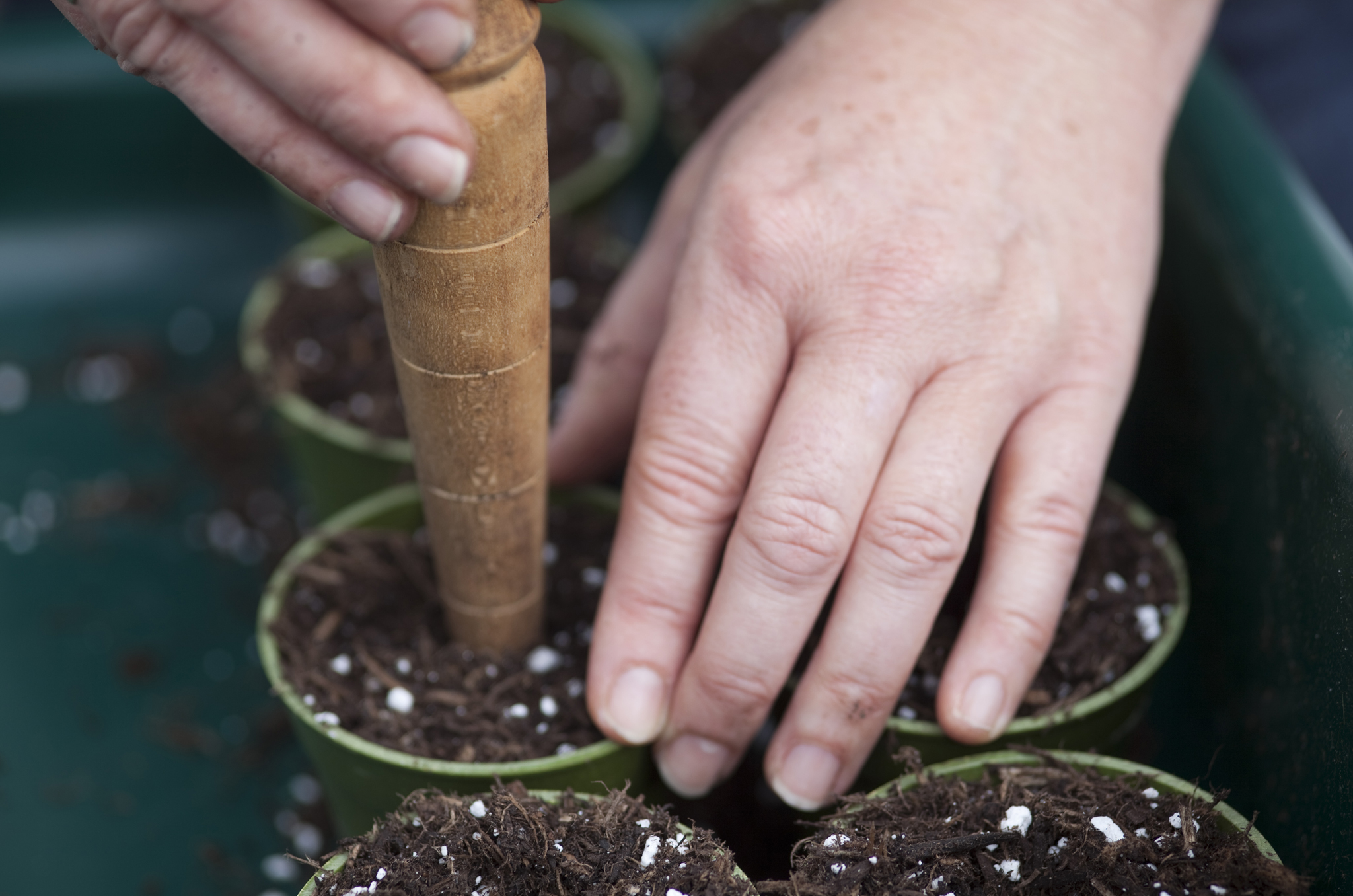 growing-on-plug-plants-use-a-dibber-to-make-holes-in-the-compost