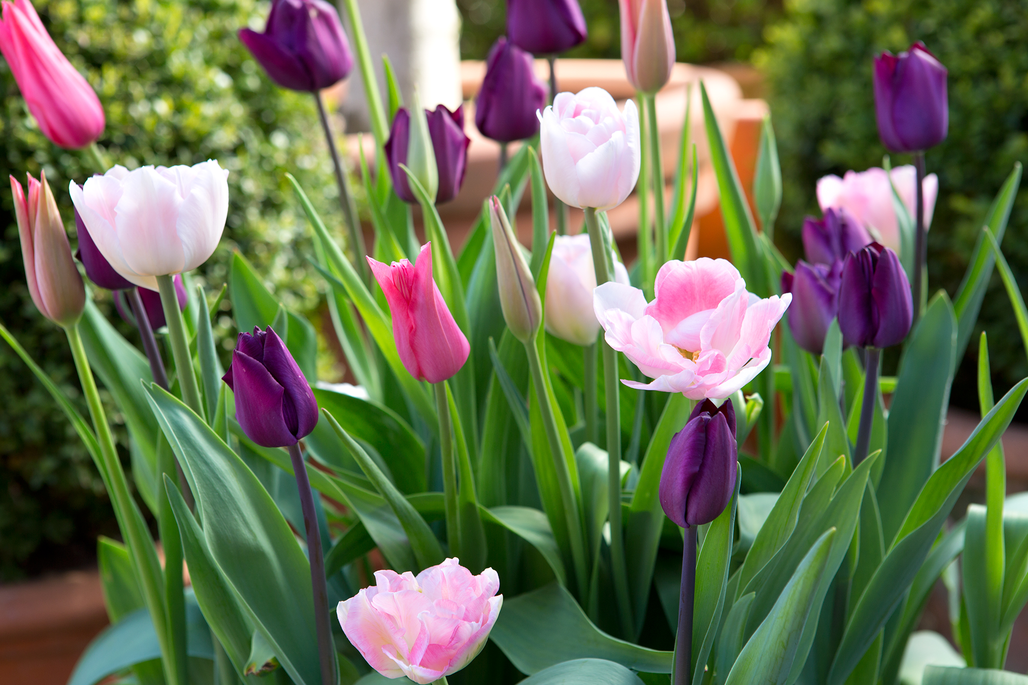 tulip-container-display-2