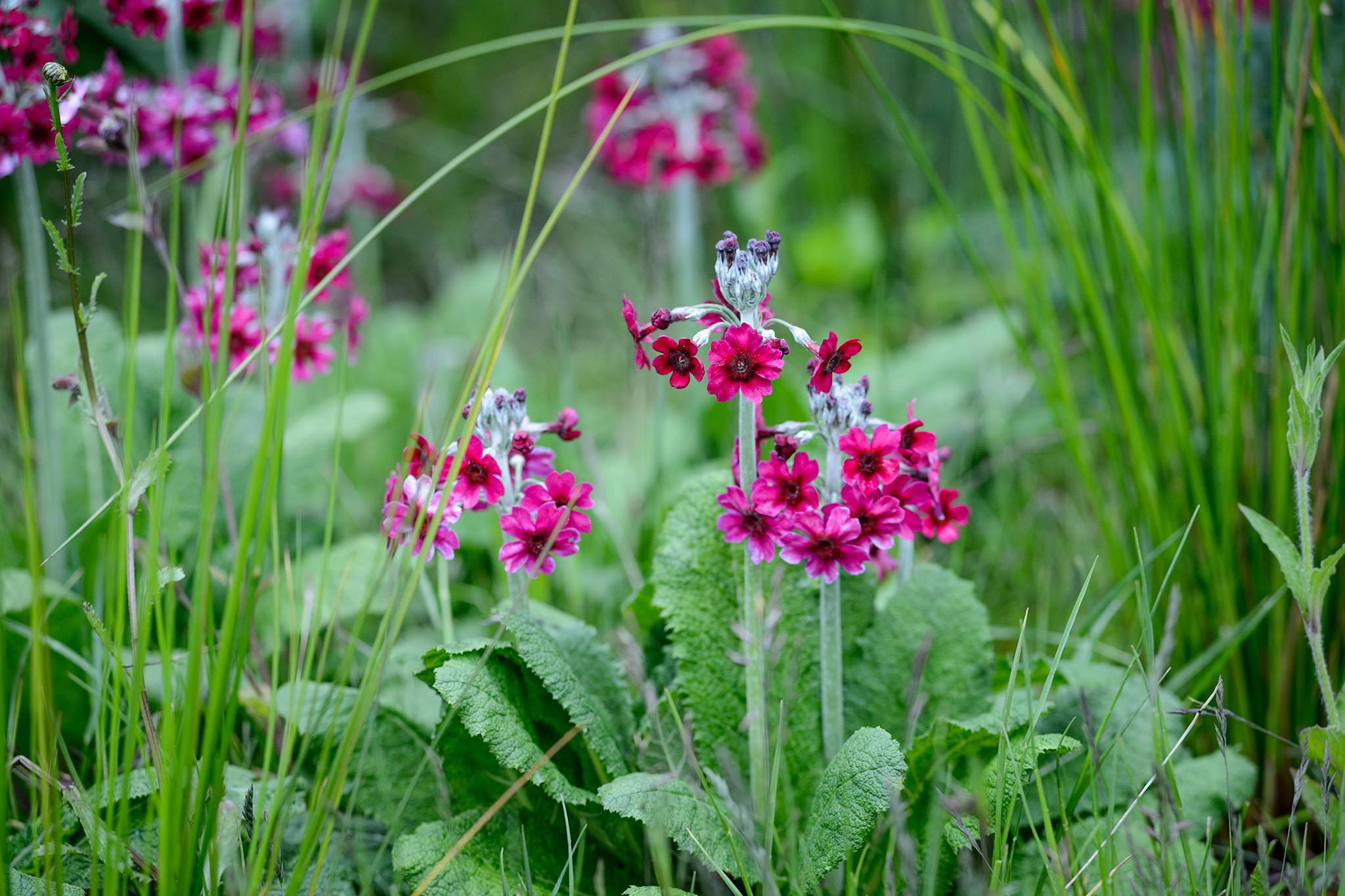 Flowering Plants For Damp Shade Gardenersworld