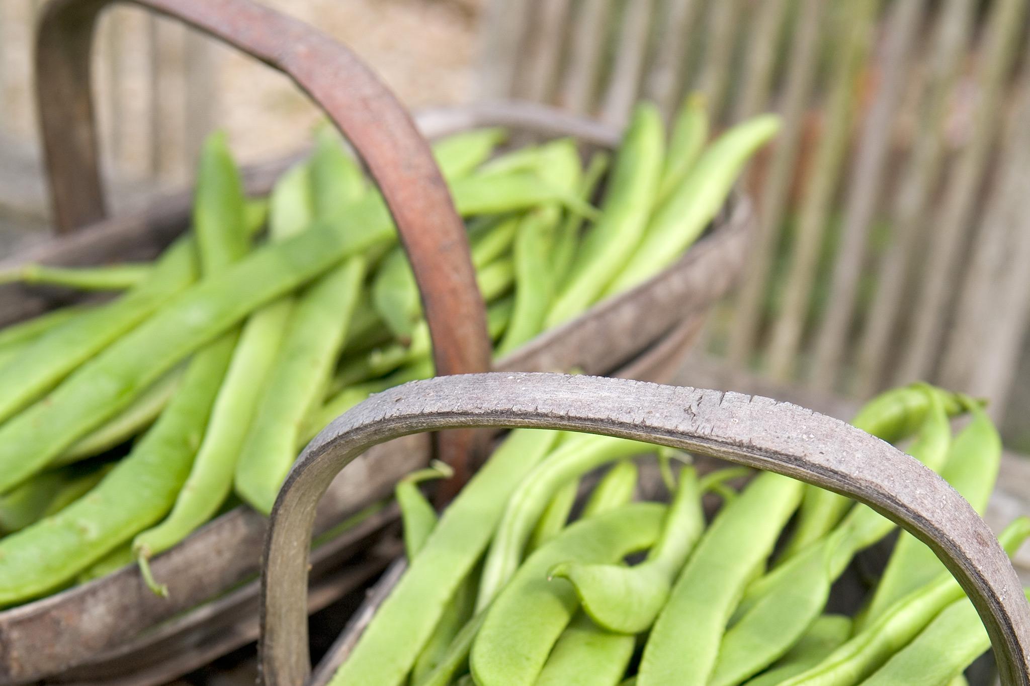 runner-beans-11