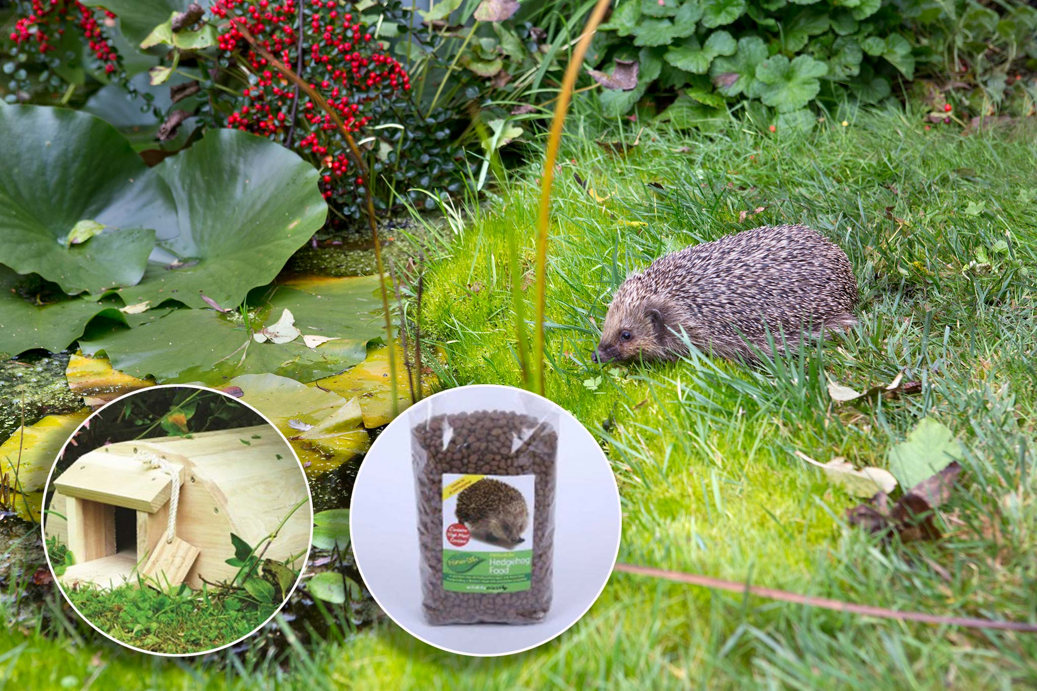 Save on hedgehog food