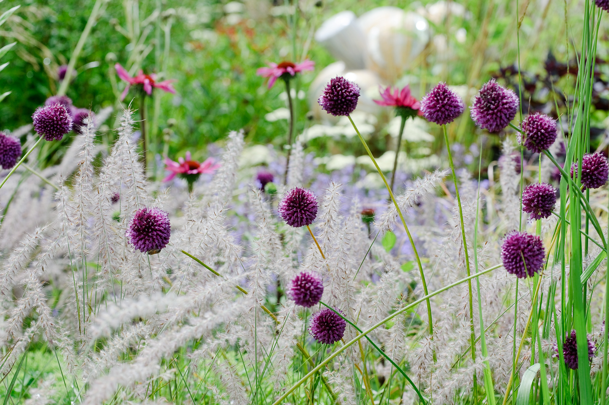 Grasses for small gardens