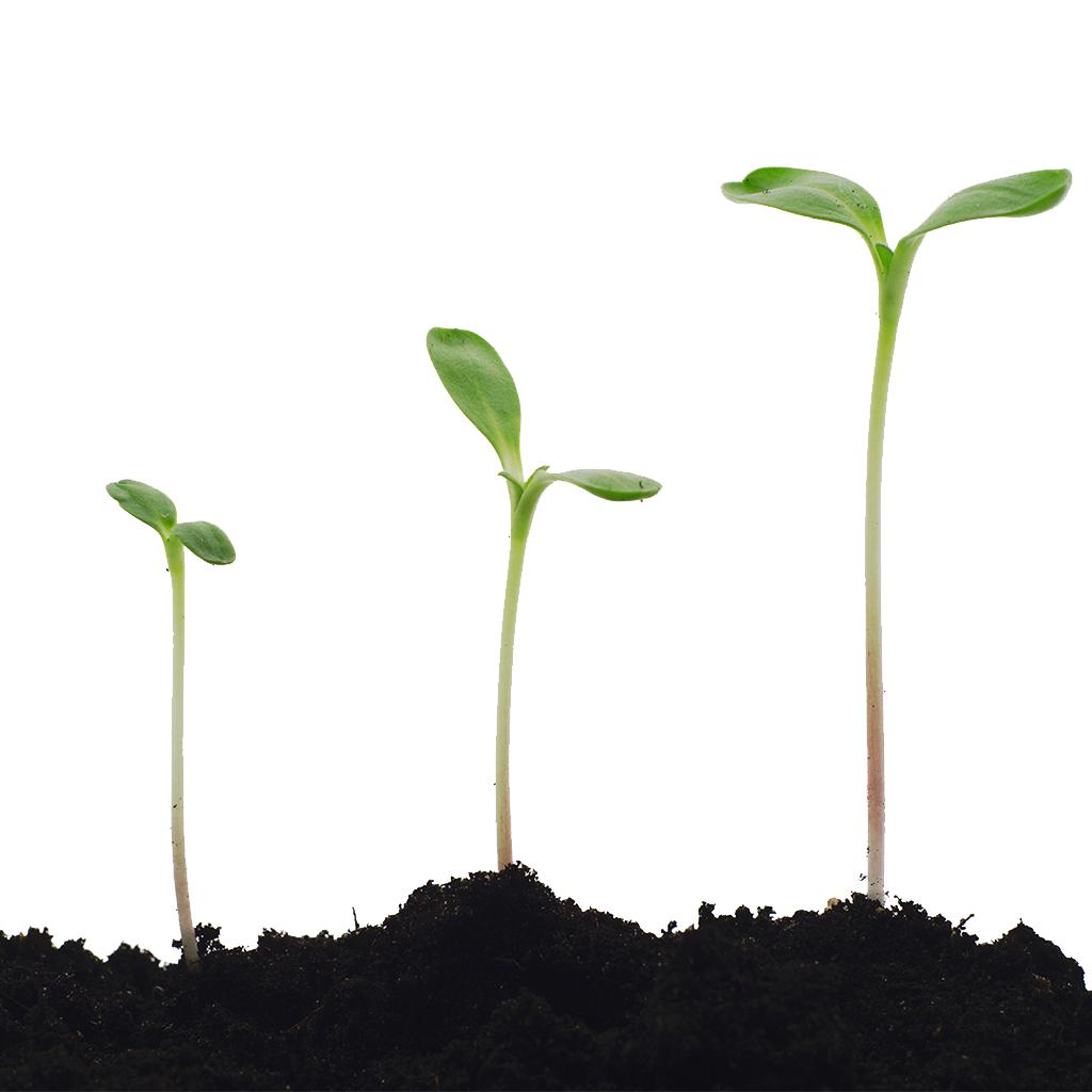 Indoor Plants Uk Tomatoes Grow Guide Step By Step Gardenersworld Com