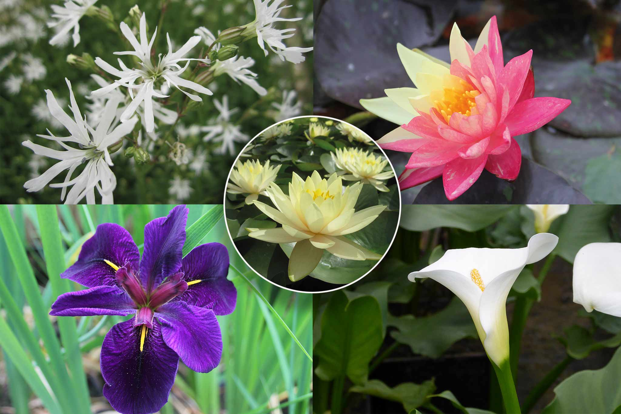 15% off pond plants