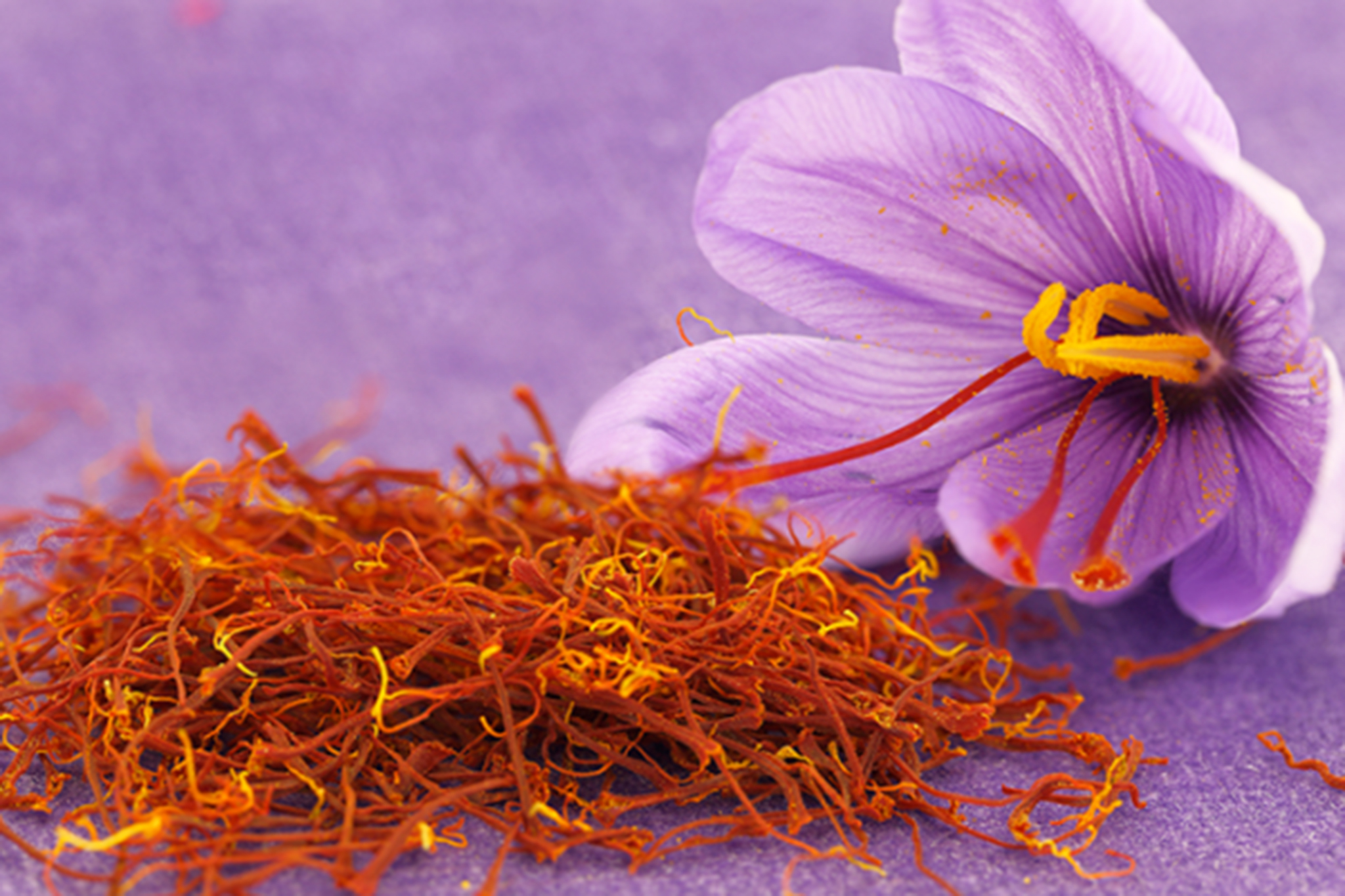 farmer-gracy-saffron-crocus