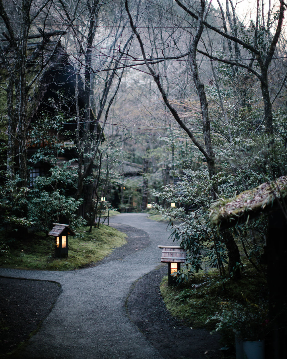 A road in Japan lined with trees and tea lights on the road