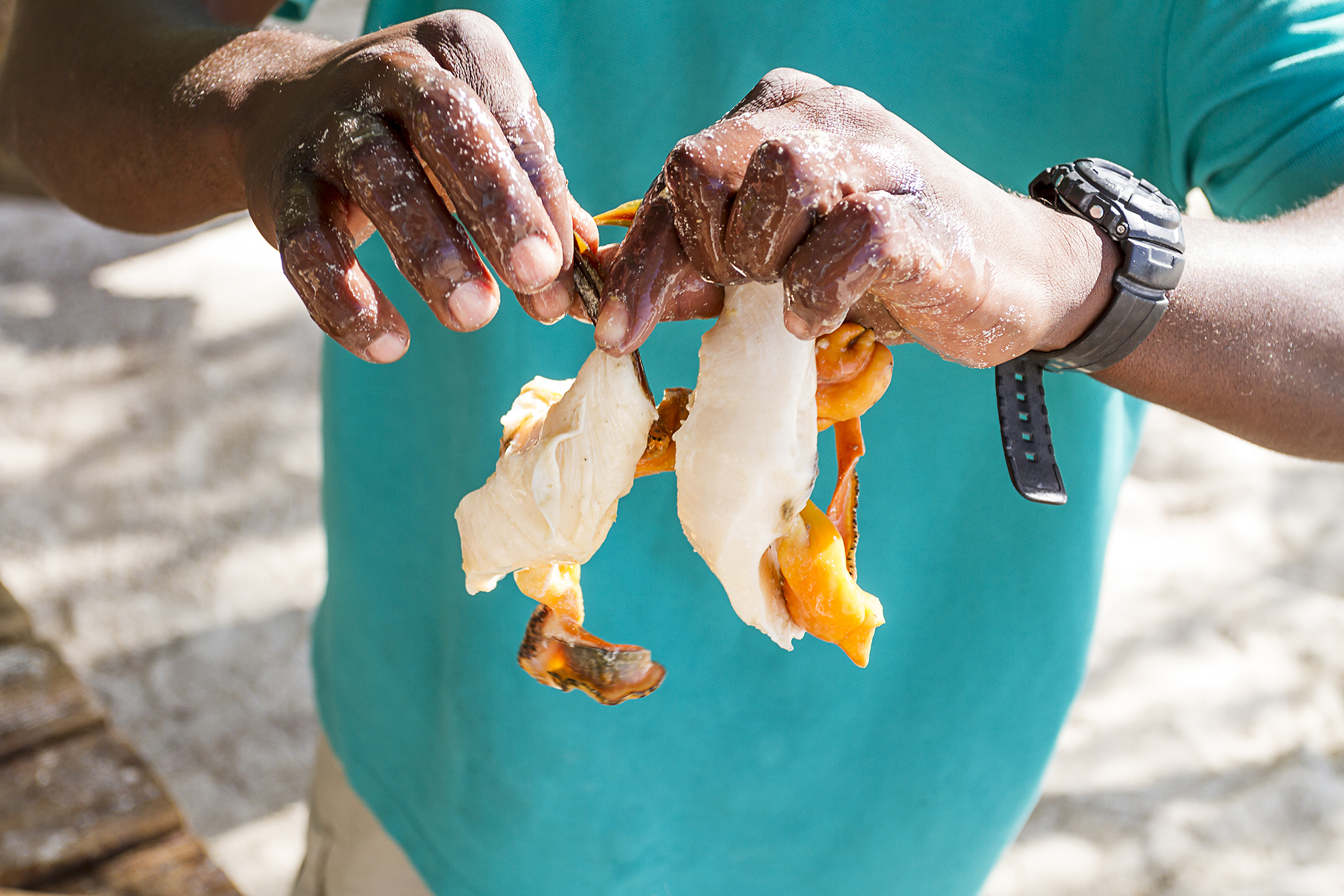 Preping conch