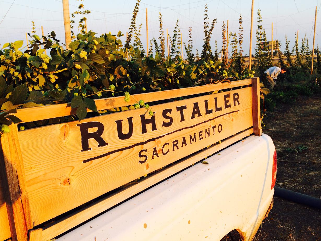 Ruhstaller Farm Hops Harvest