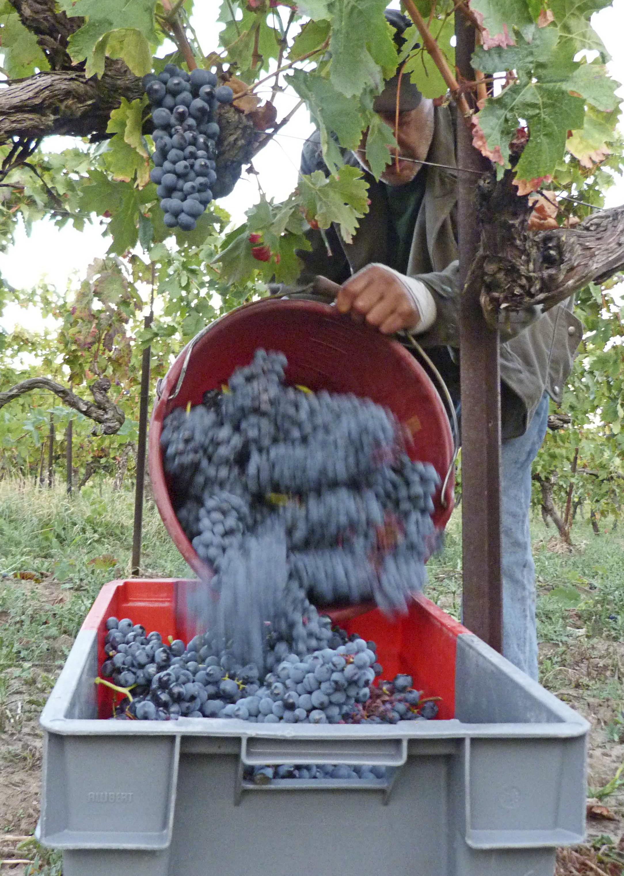 Cressance Vineyard