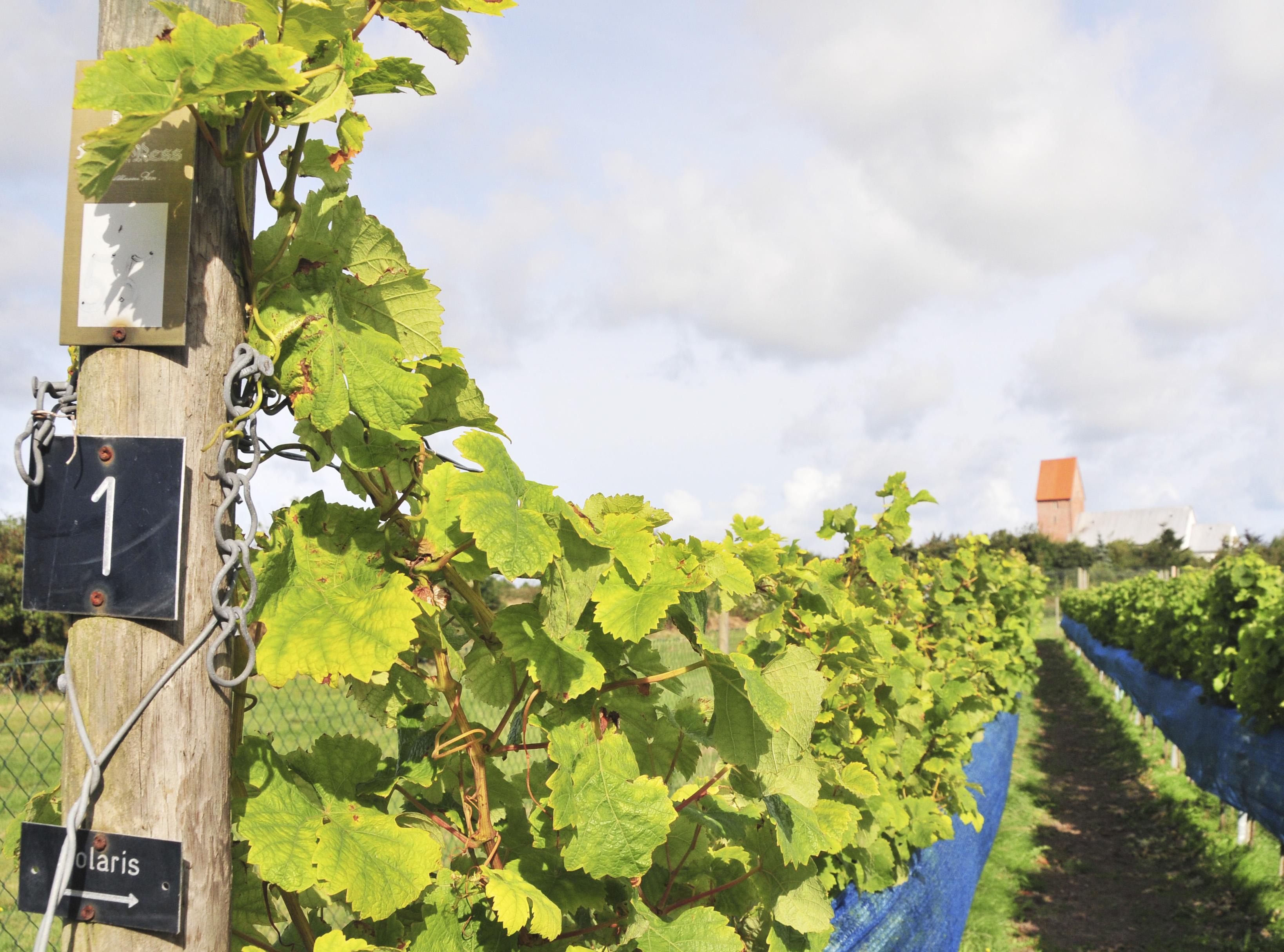 Nils Lackner's vineyards