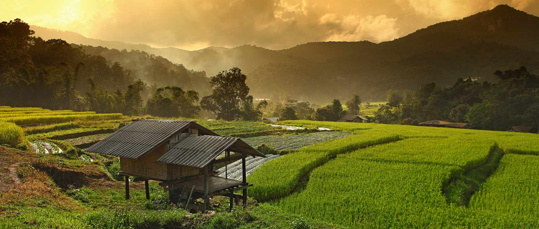 Green fields with a dark orange sky in Chiang Mai, Thailand