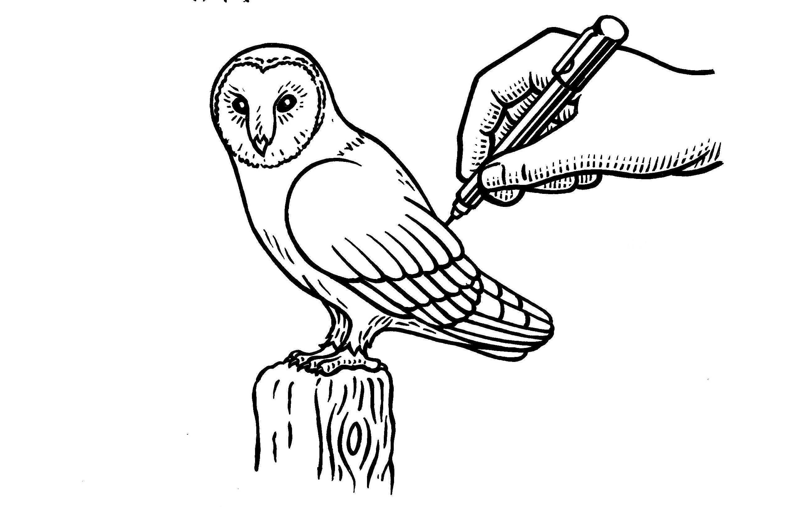 All About Gambar Mudah Amp Simple Sketsa Pensil Burung Hantu Owl