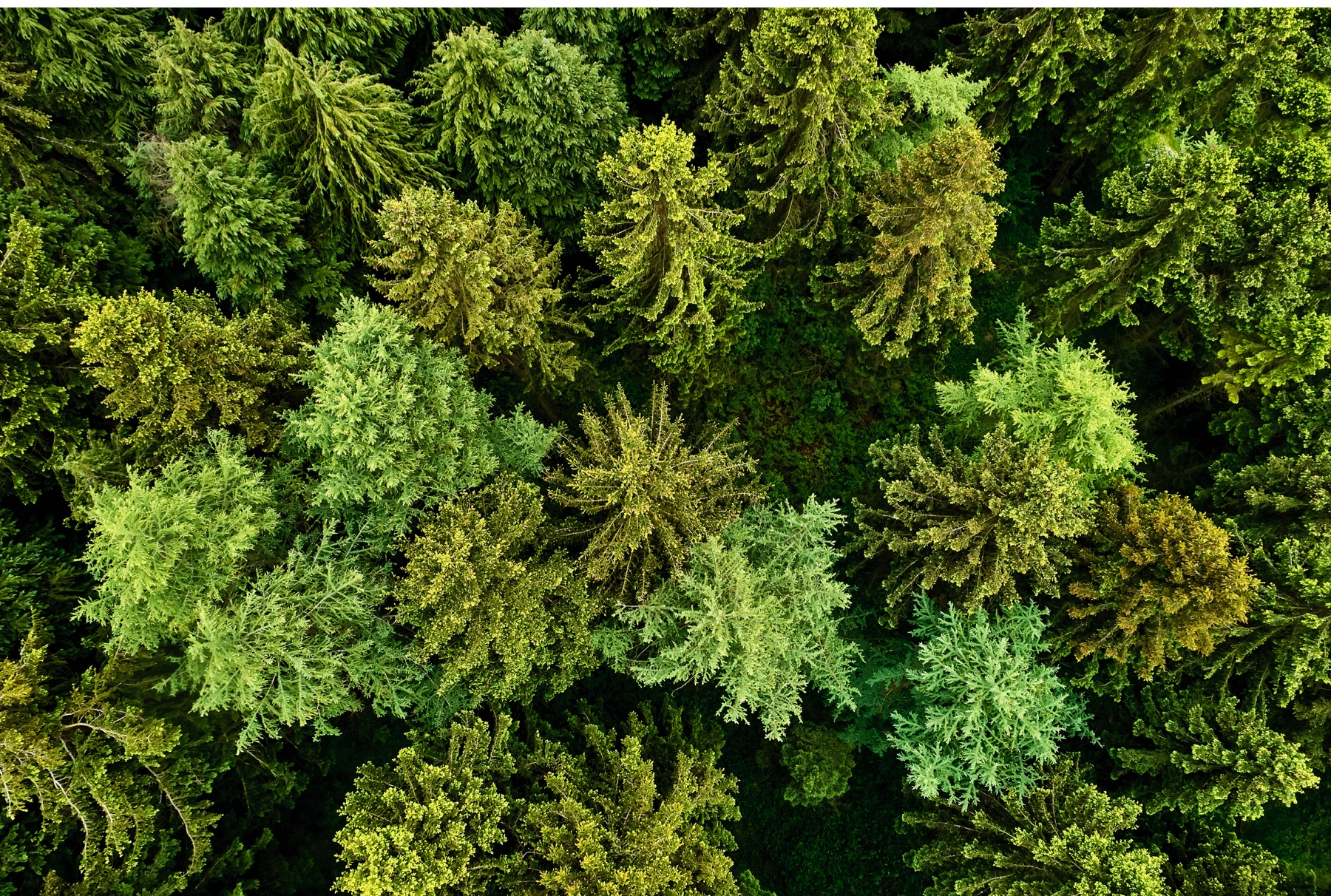 UK's best forests and woodlands