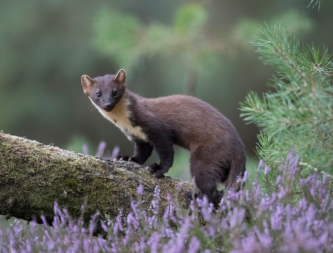 Best places to photograph wildlife in the UK