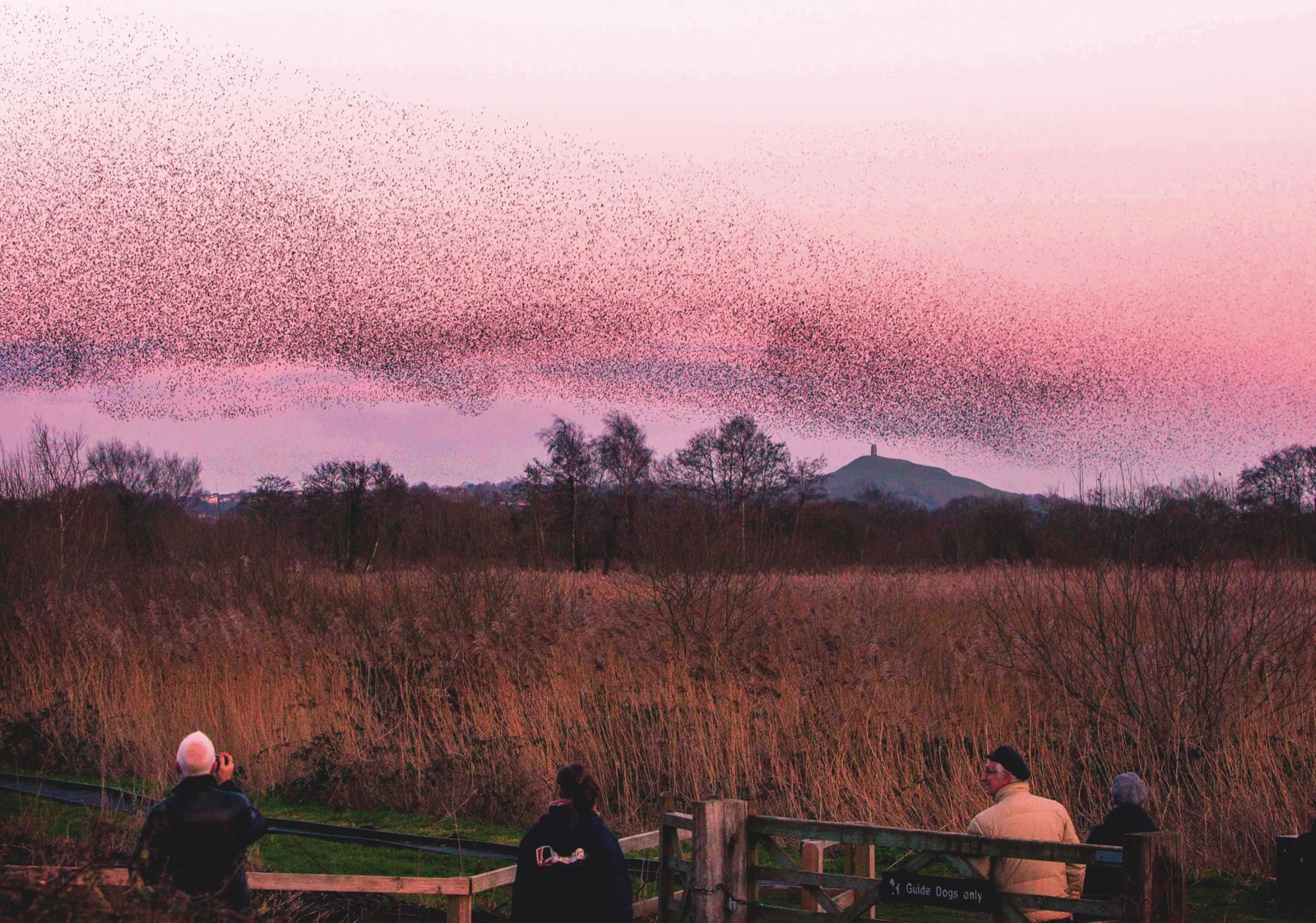 What is a starling murmuration and where are the best places in Britain to see one?