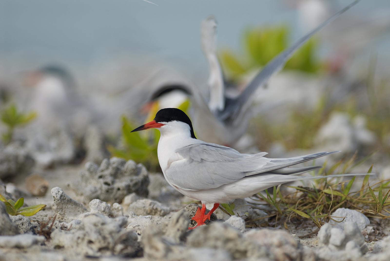 Where do birds go in winter?