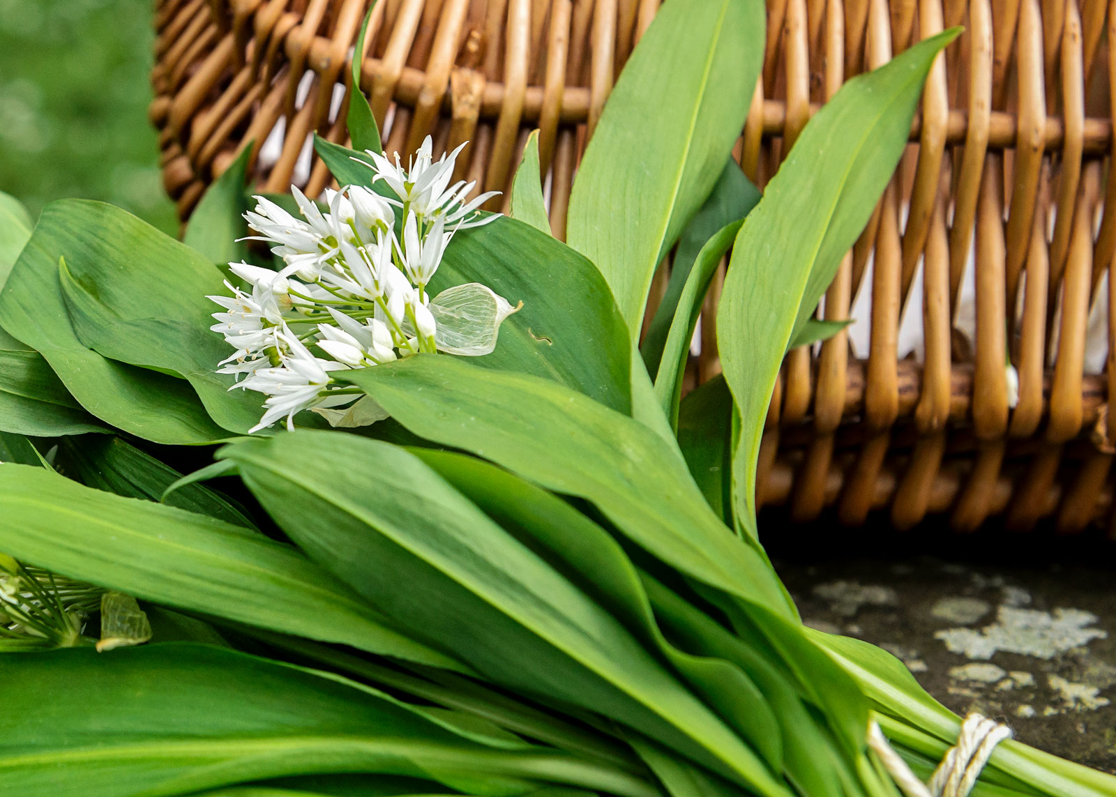 Wild garlic guide: where to find, how to cook it and recipe ideas