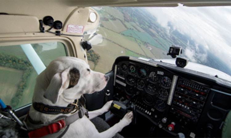 This dog was less than 24 hours from being put down – now it can fly a plane