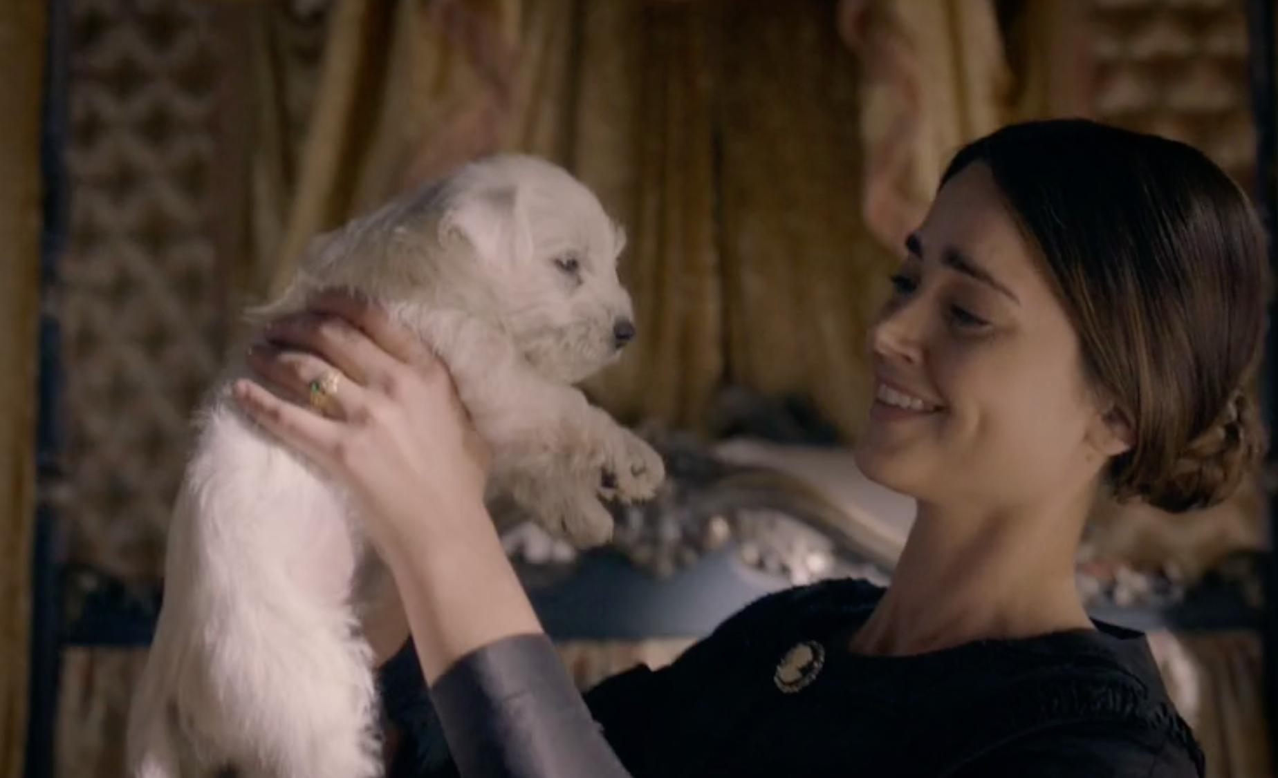 Victoria ITV dog