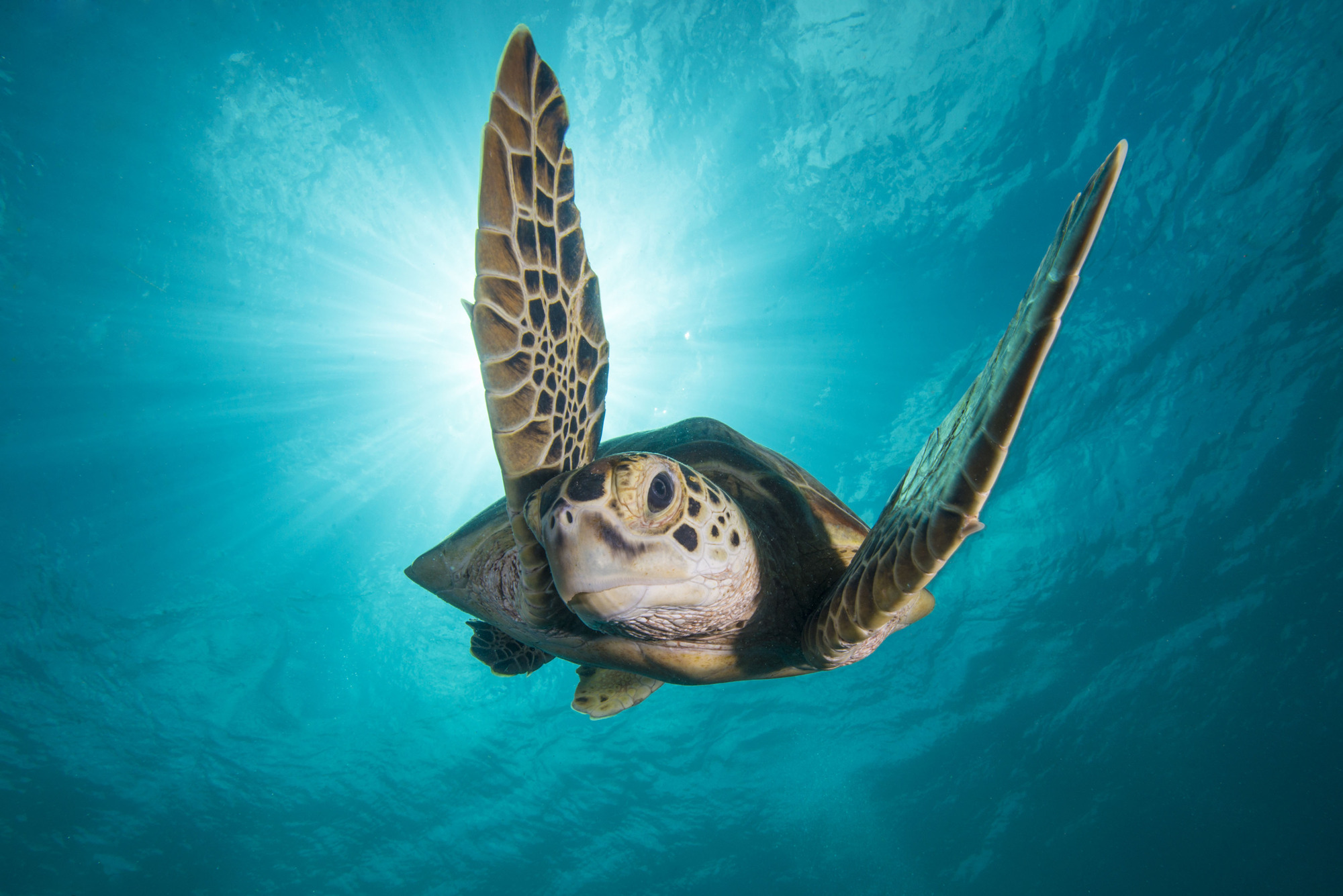 A turtle in Blue Planet 2