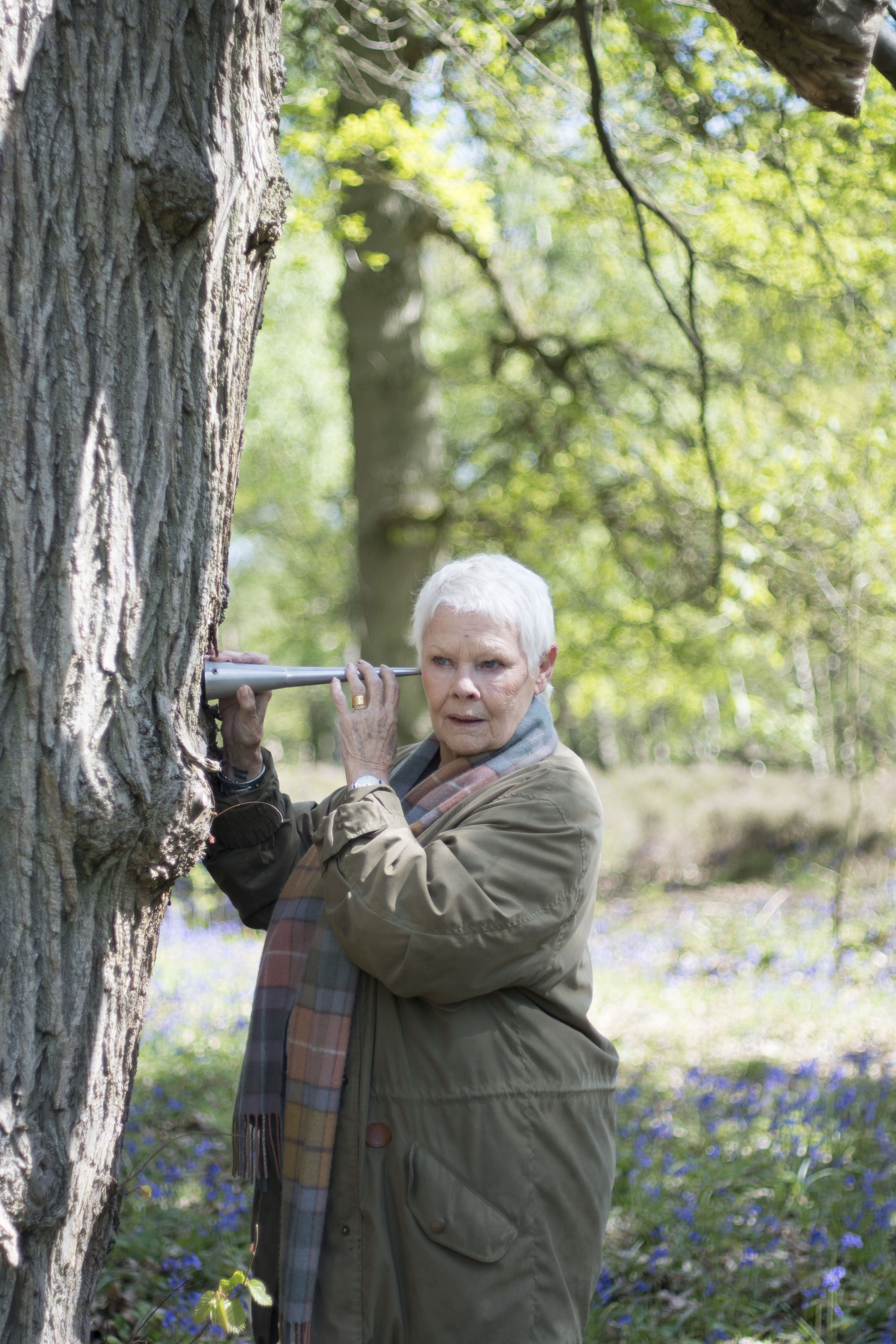 Judi Dench: My Passion For Trees (BBC, EH)