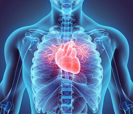 Heart (Getty, EH)