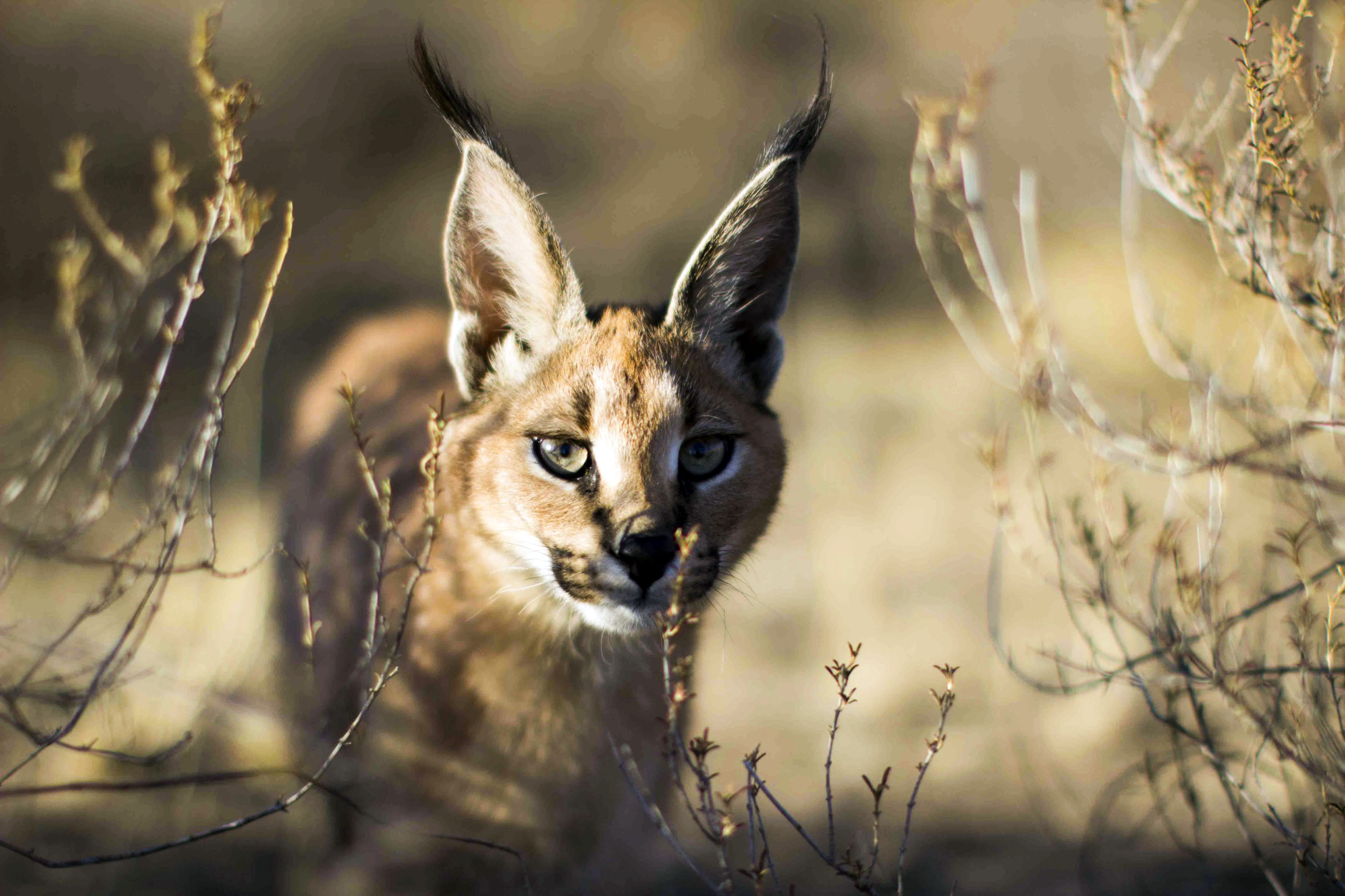 New Series Of  Out Of  Cats