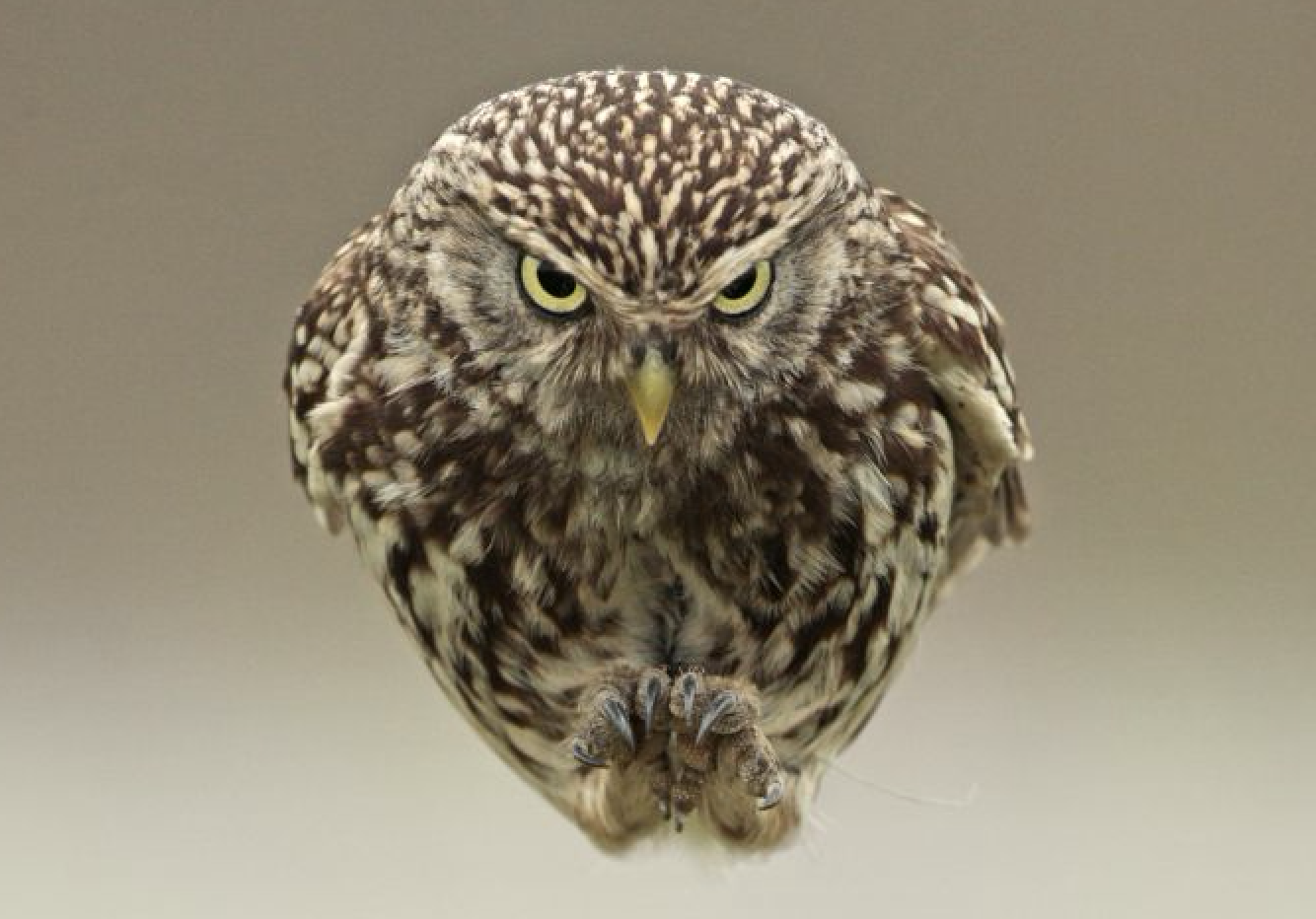 The Secret Life of Owls (Russell Savory, EH)